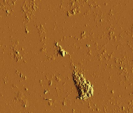 c. Detritus spermie za 10 minut po přidání peroxidu vodíku.