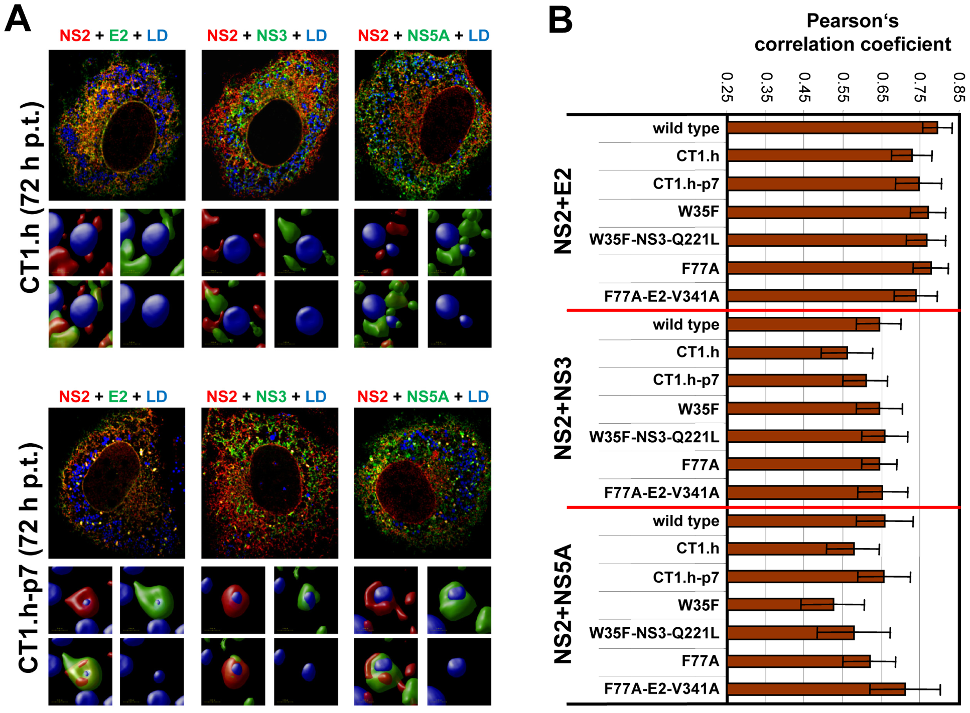 Impact of NS2 mutations and the corresponding pseudoreversions on colocalization with structural and nonstructural proteins and accumulation around LDs.