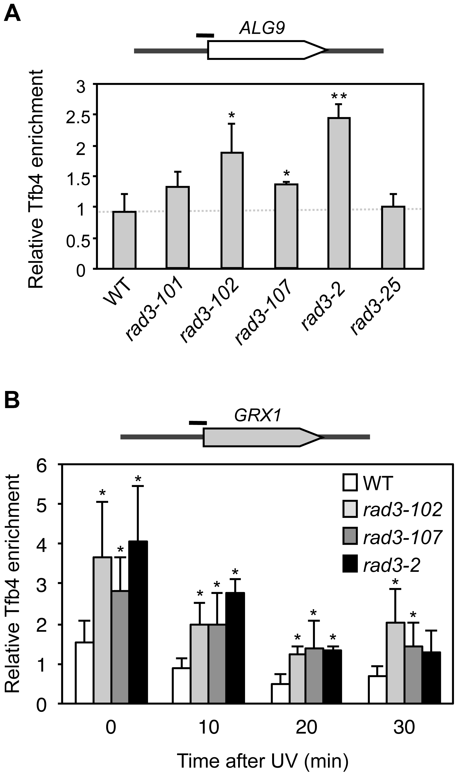 Analysis of TFIIH recruitment to promoters in <i>rad3</i> mutants.