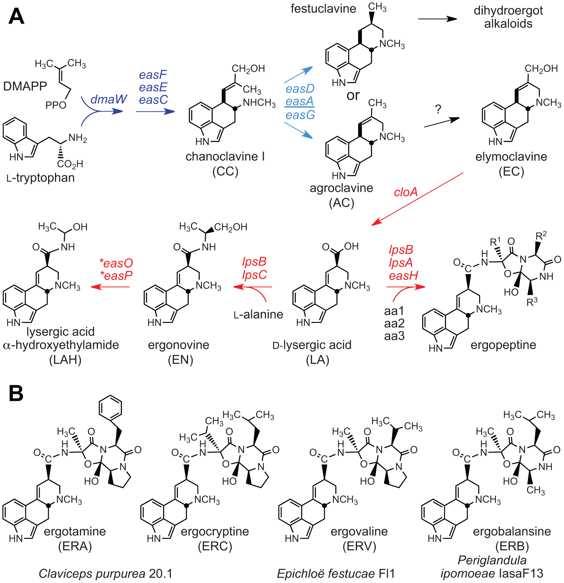 Ergot alkaloids and summary of biosynthesis pathway.