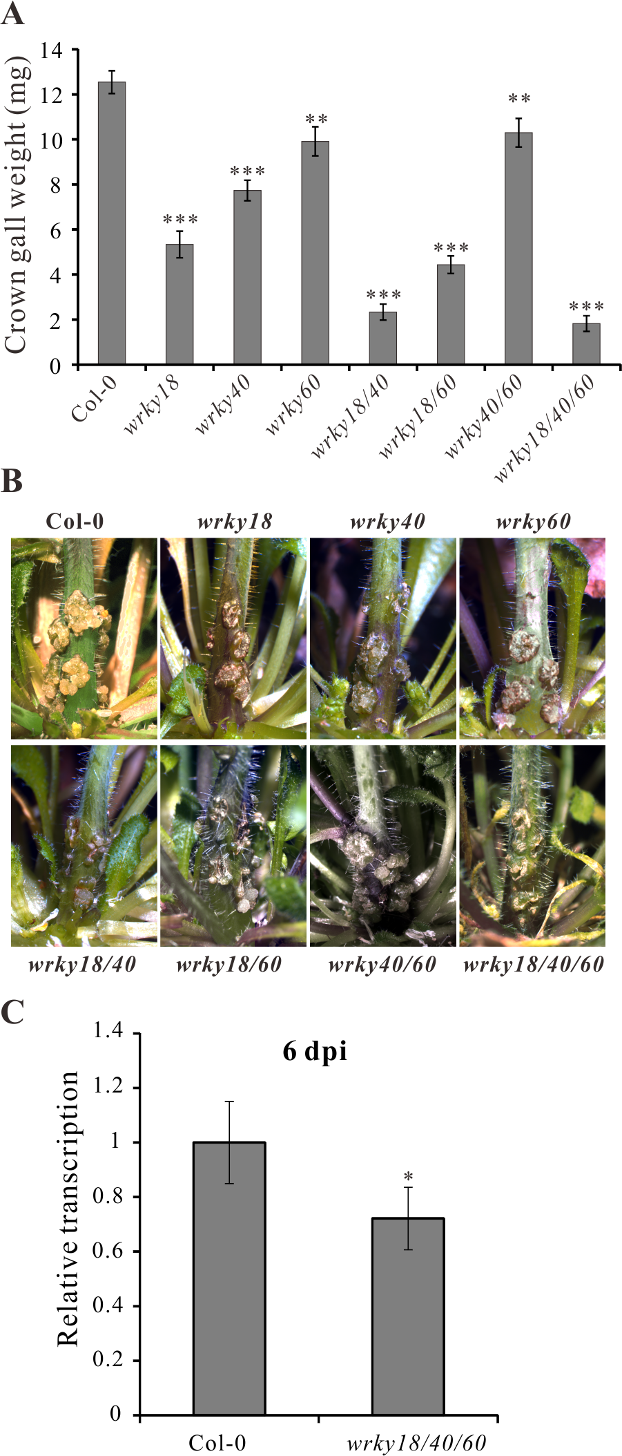 <i>Arabidopsis wrky</i> mutants develop smaller crown galls.