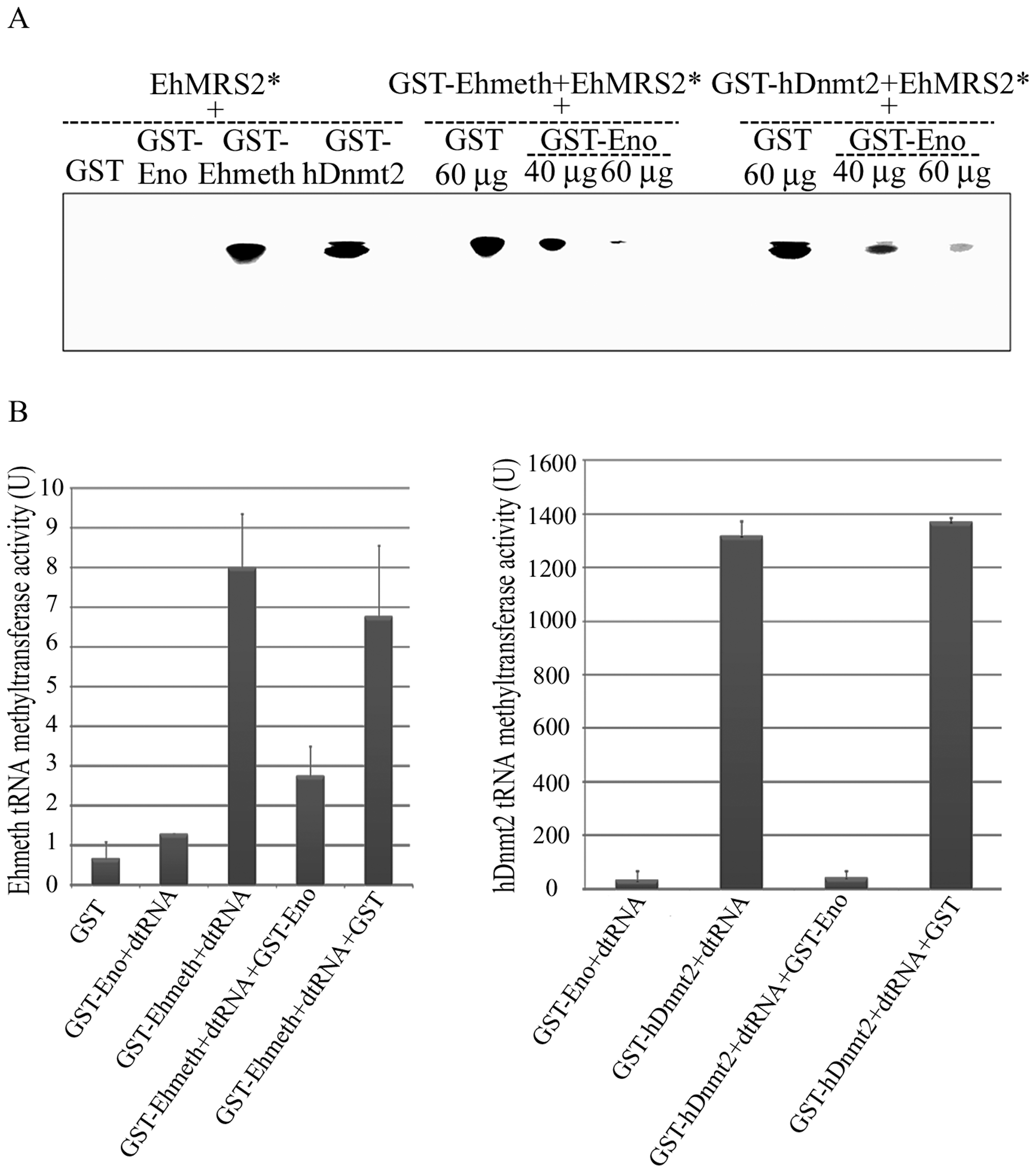 Enolase inhibits Ehmeth and hDnmt2 functions.