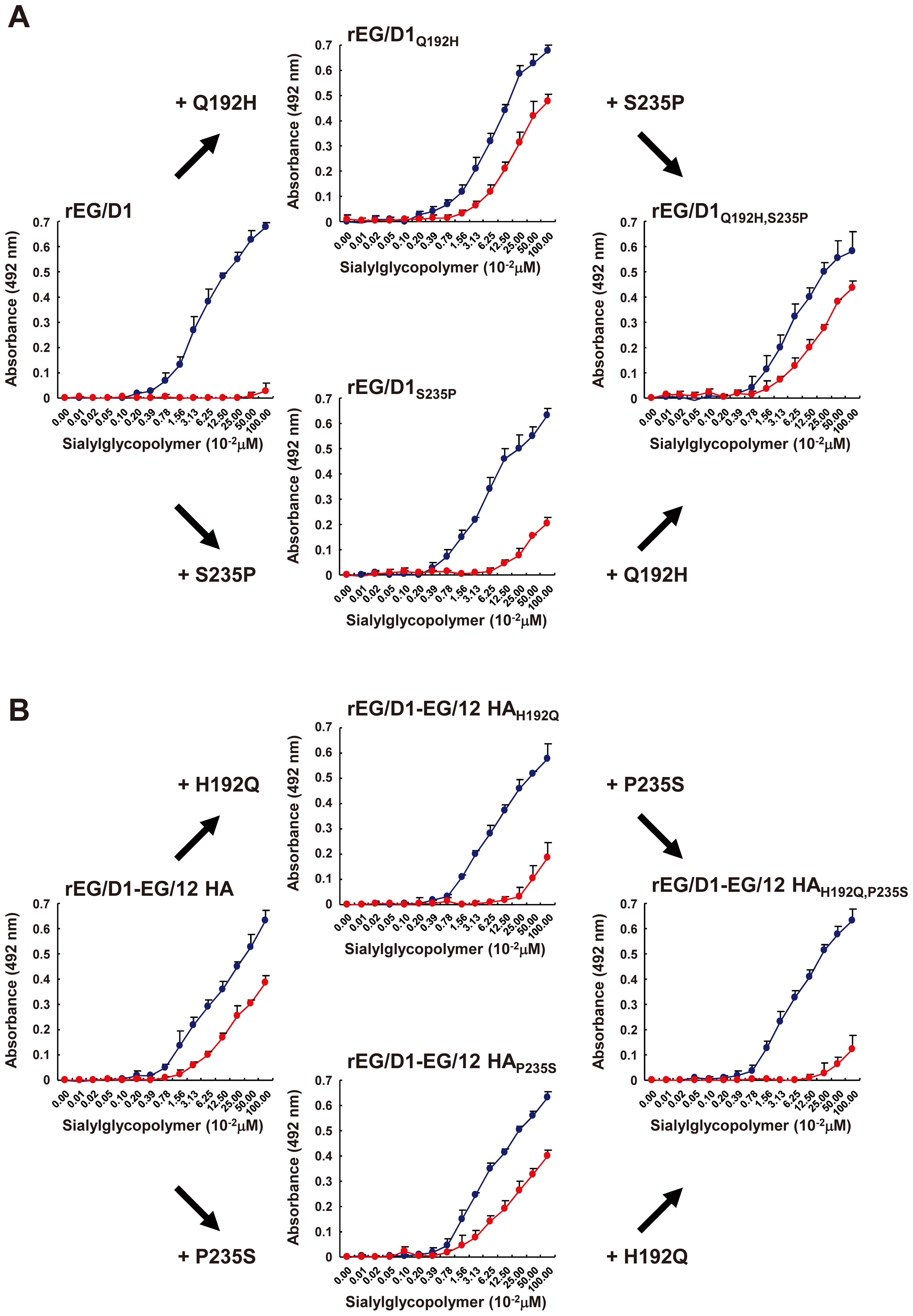 Effect of HA mutations in sublineage A viruses on receptor specificity of EG/D1 virus HA.