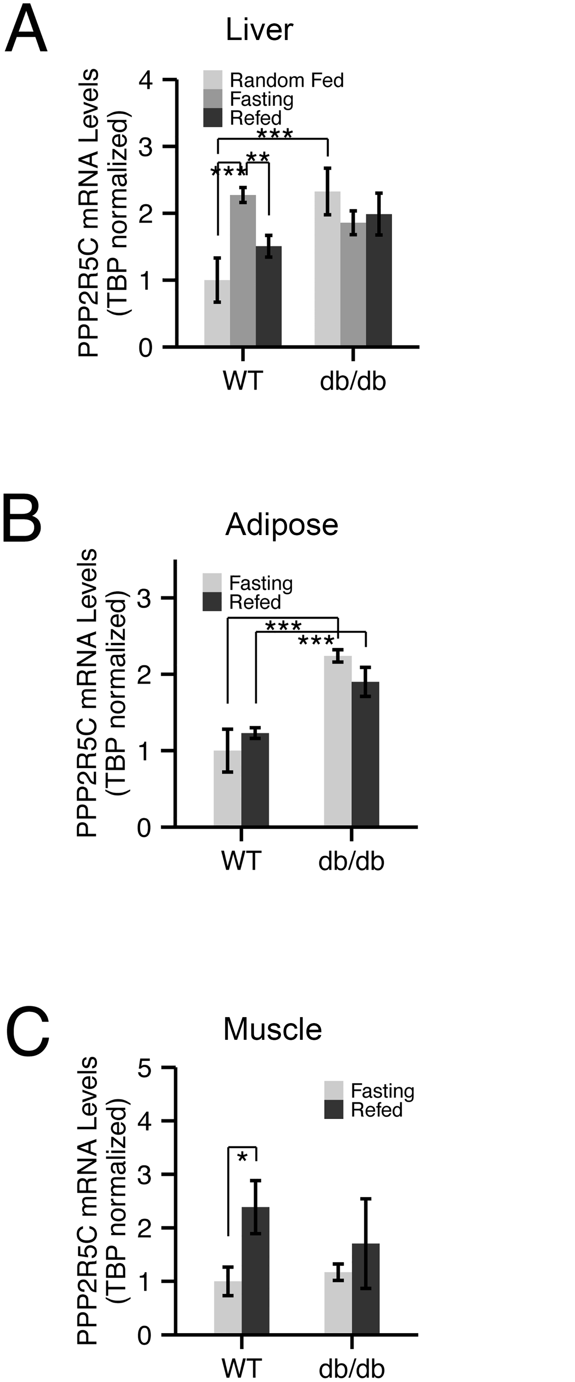 Expression of PPP2R5C is nutritionally regulated in metabolically relevant tissues.