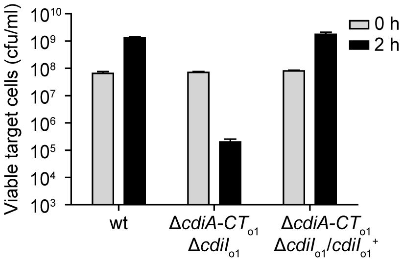 The EC93 orphan region produces functional CdiI<sub>o1</sub> immunity protein.