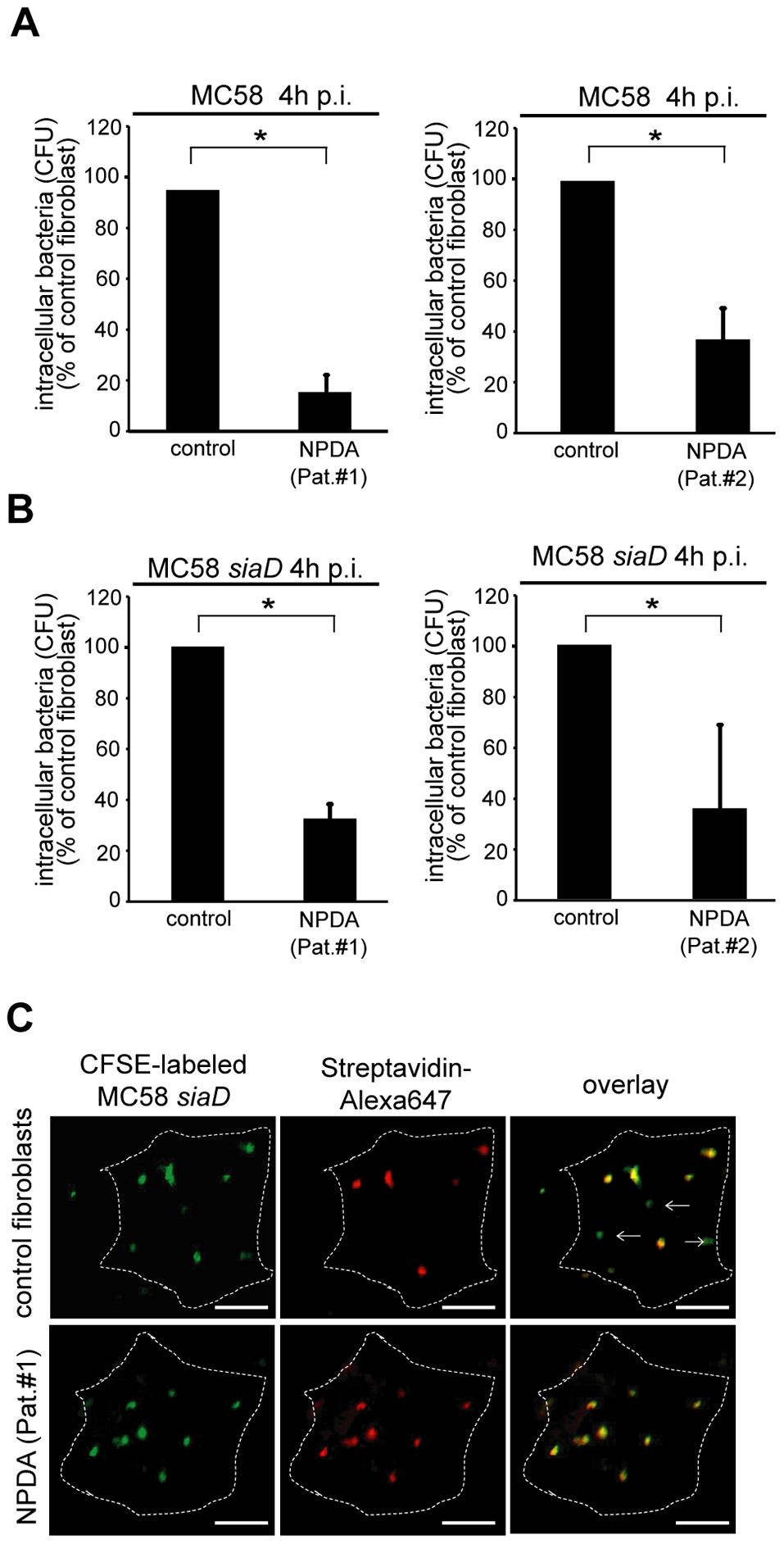 Niemann-Pick disease fibroblasts are significantly less invaded by <i>N. meningitidis</i>.
