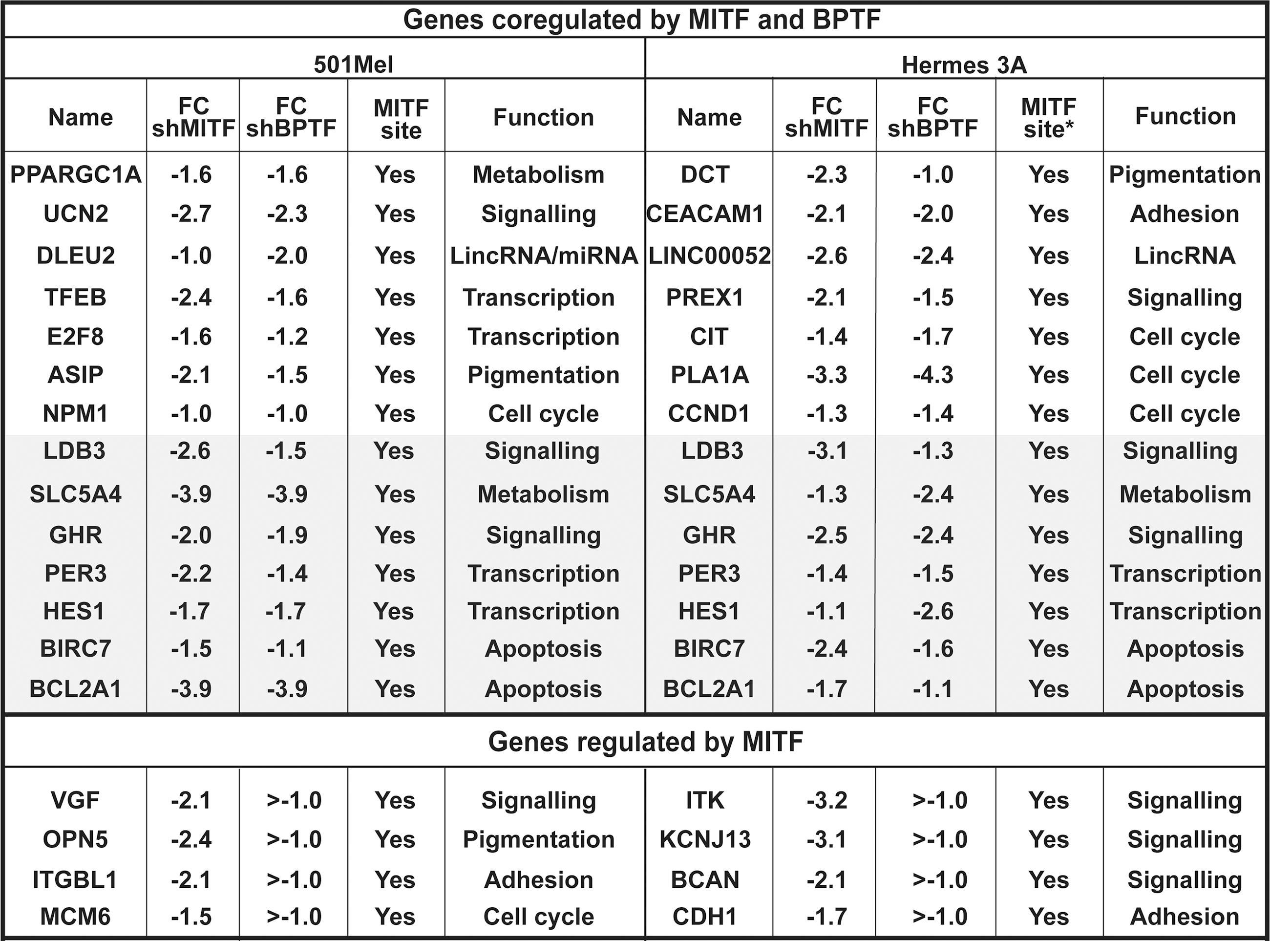 Co-regulated genes in 501Mel and Hermes 3A cells.