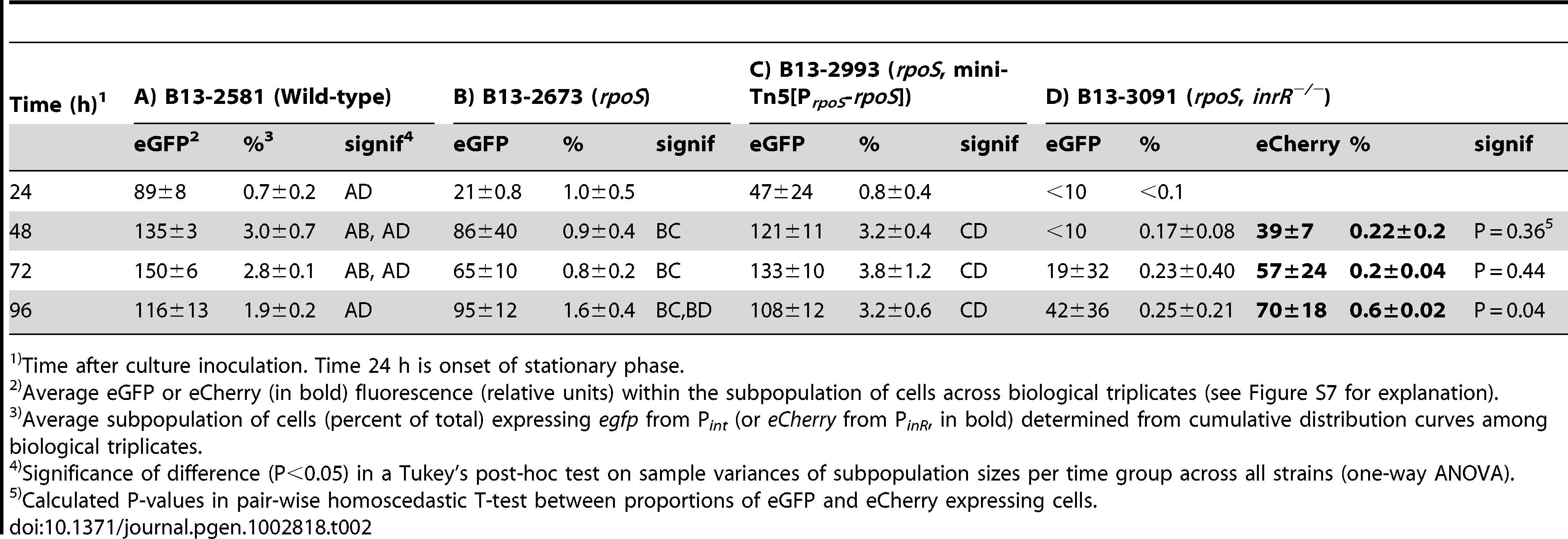 Effect of <i>rpoS</i> inactivation on reporter fluorescence from a single-copy P<i><sub>int</sub></i>-<i>egfp</i>; P<i><sub>inR</sub></i>-<i>eCherry</i> fusion in <i>P. knackmussii</i> strain B13 and derivatives.