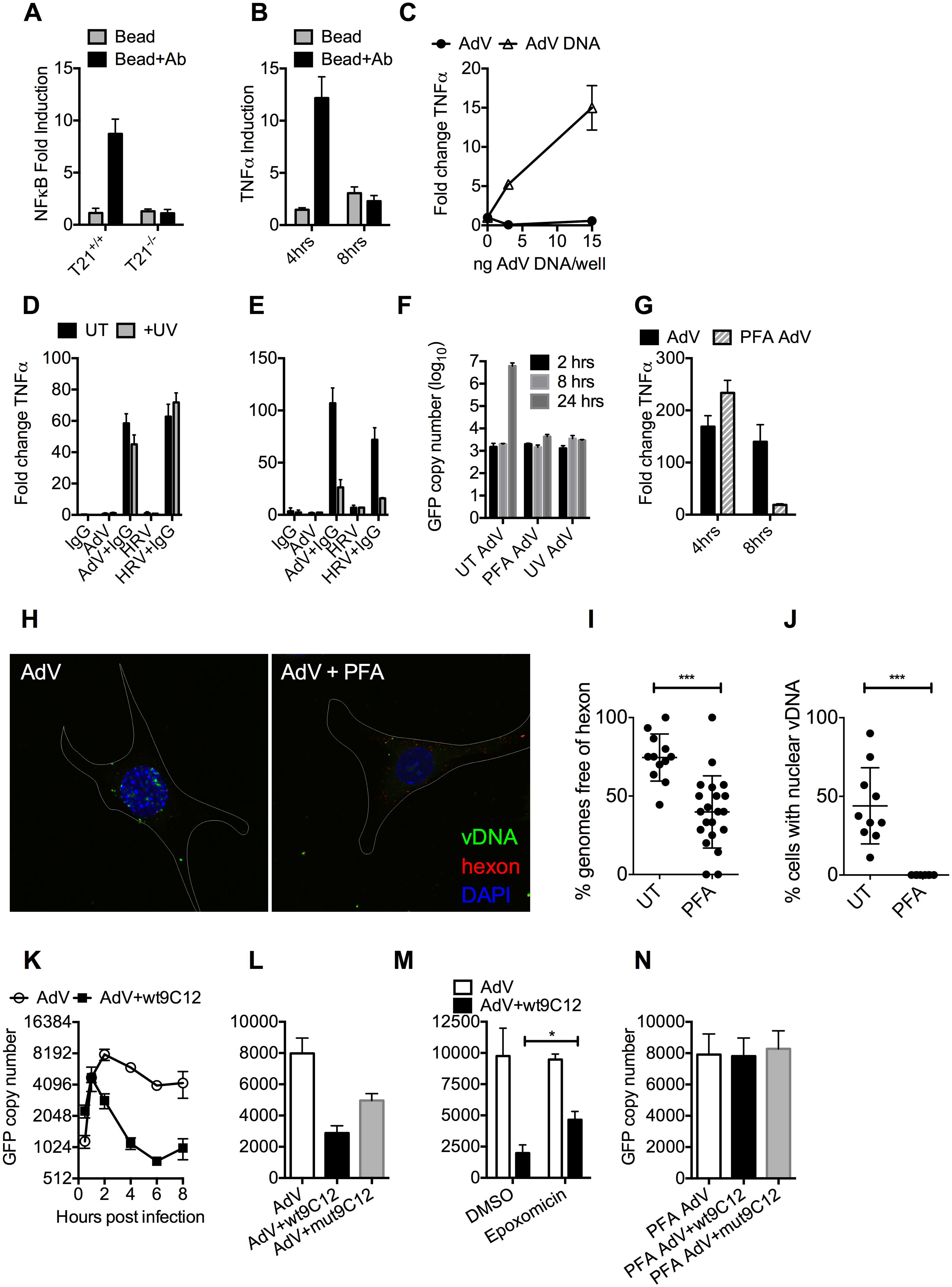 Antibody-dependent uncoating reveals viral genomes.