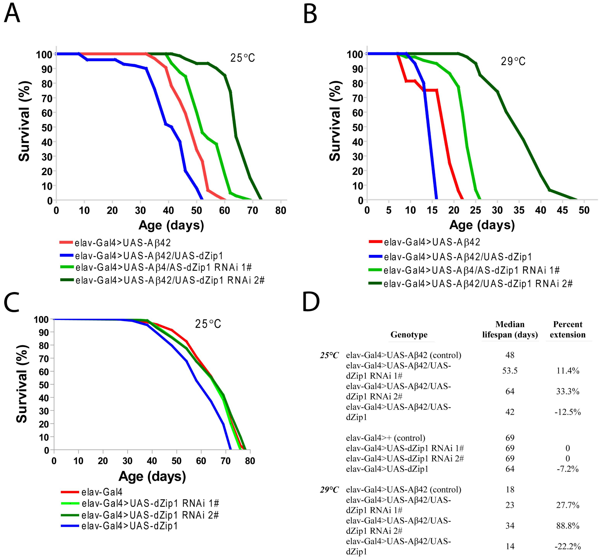 <i>dZip1</i> knockdown significantly lengthens the lifespan of Aβ42 flies.