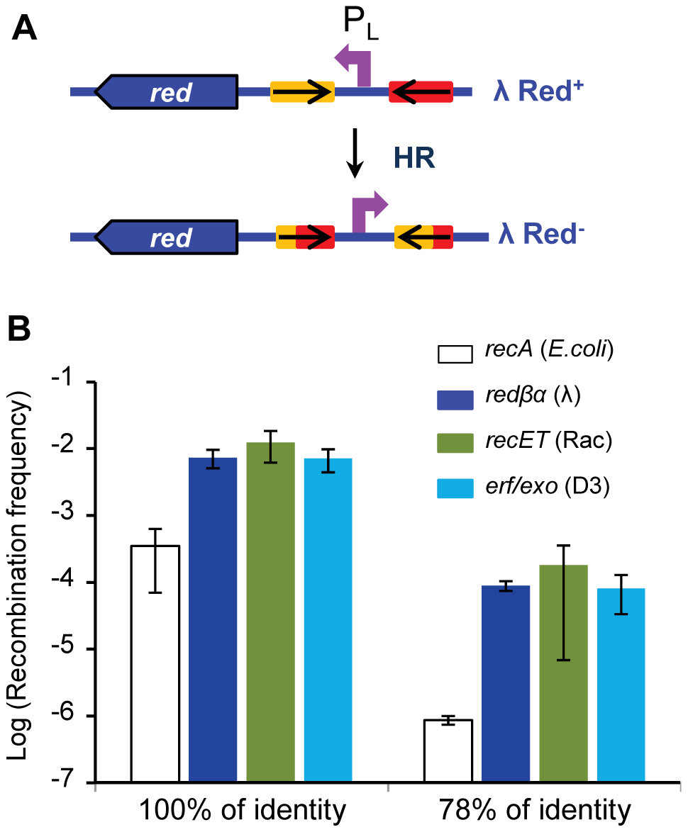 High efficiency of recombination of two other Rad52 recombinases.