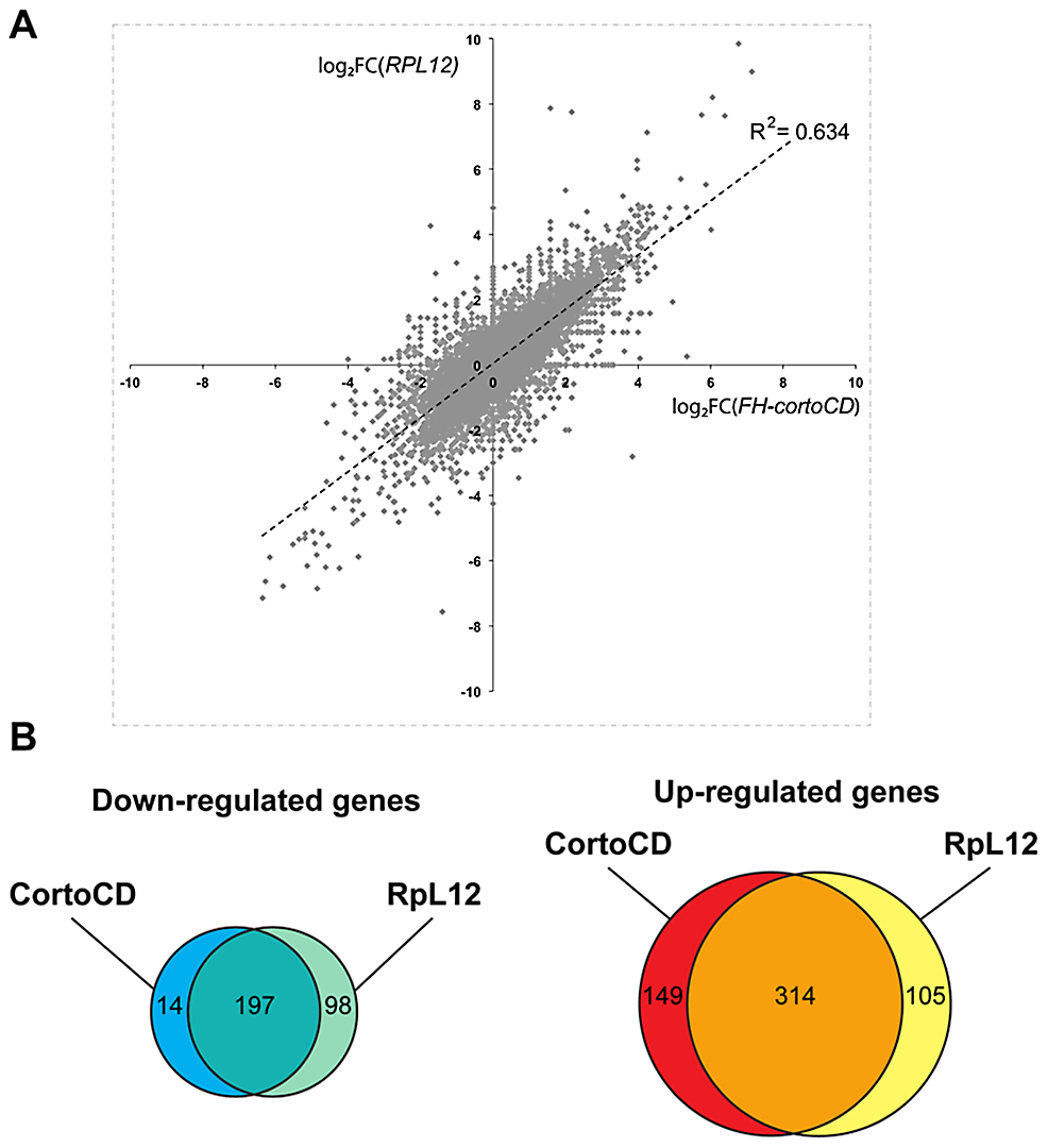 Comparison of genes deregulated by <i>cortoCD</i> and <i>RpL12</i> over-expression.