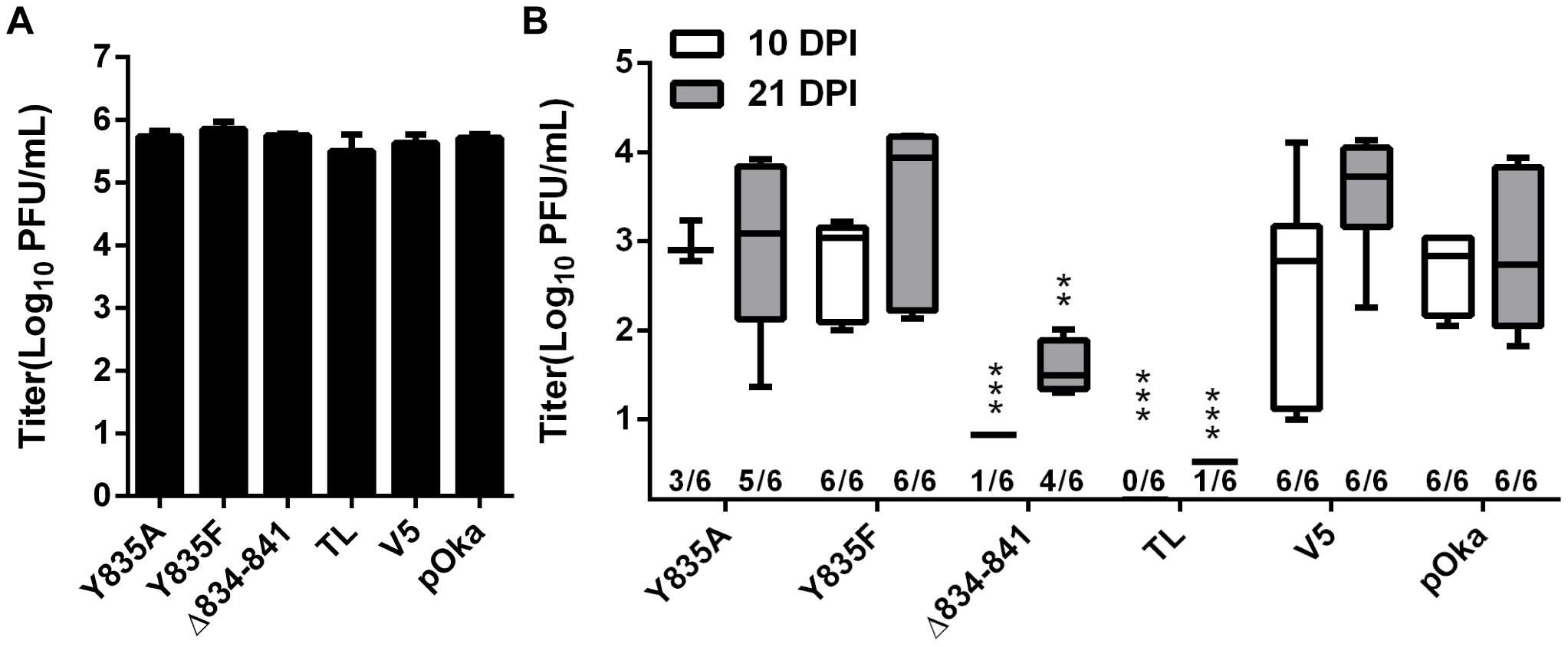 Truncation of the gHcyt restricts VZV pathogenesis in human skin xenografts.