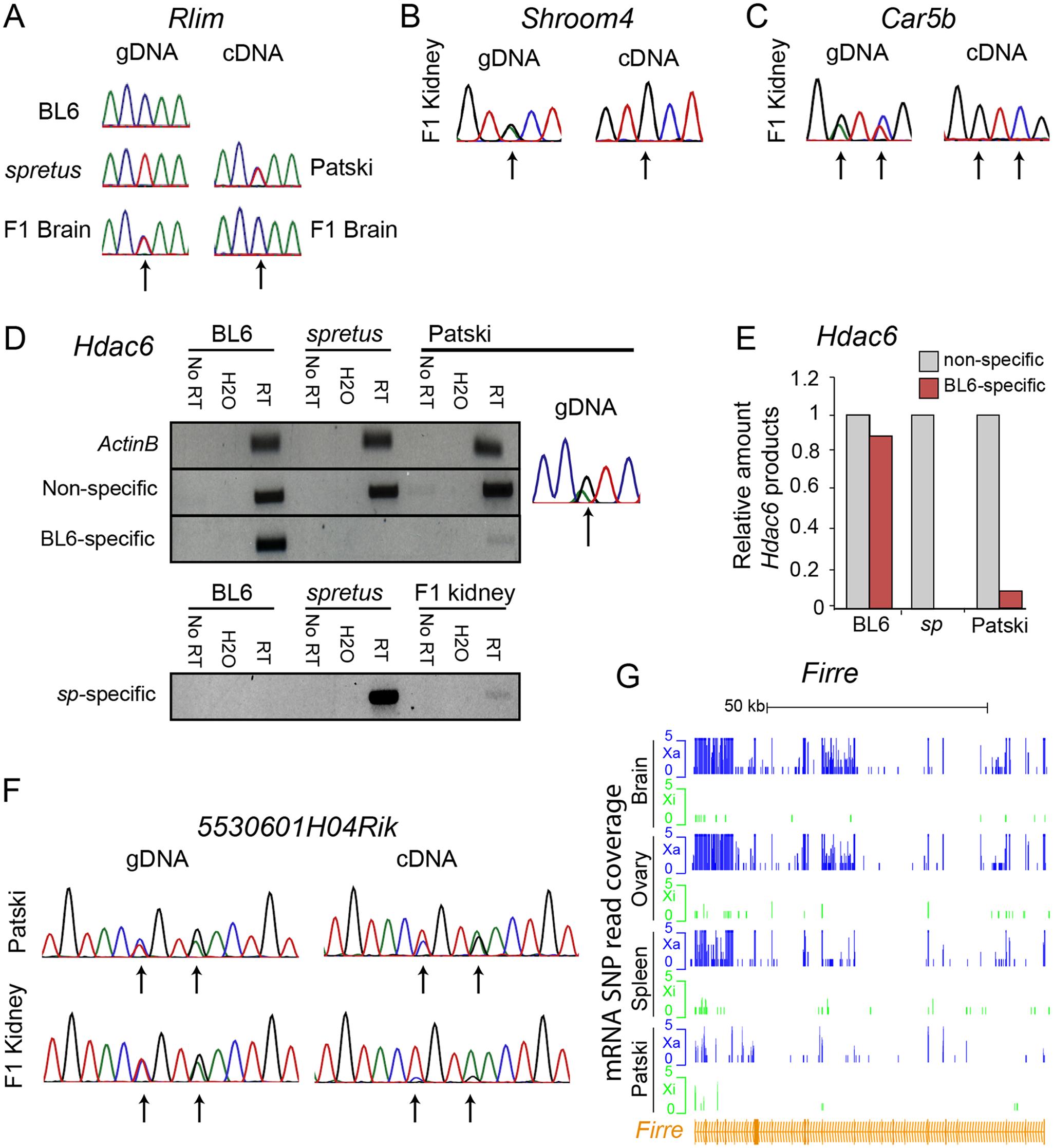 Validation of <i>Rlim</i>, <i>Shroom4</i>, <i>Car5b</i>, <i>Hdac6</i>, <i>5530601H04Rik</i> expression profiles and <i>Firre</i> mRNA profiles.