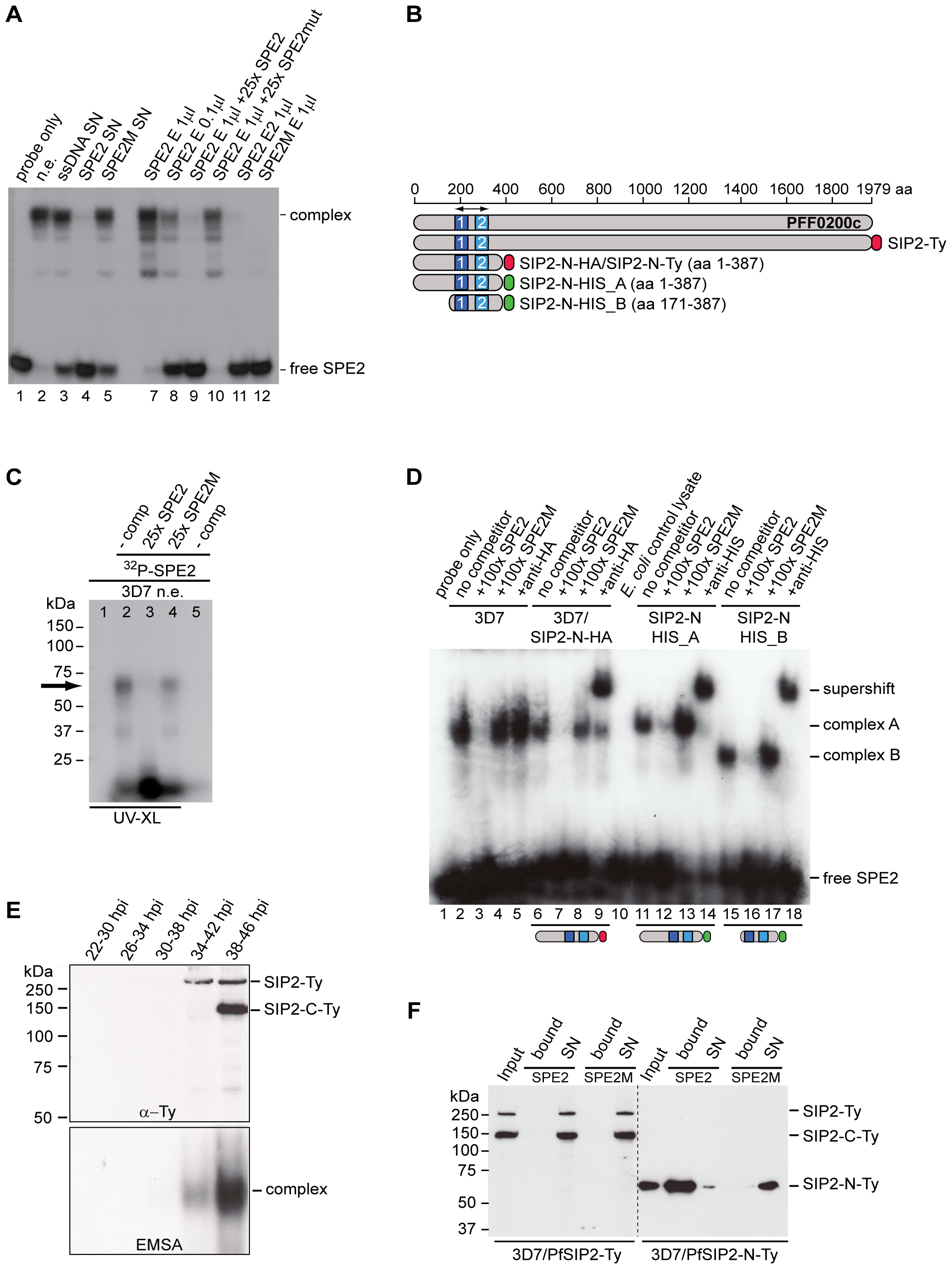 Identification of the ApiAP2 protein PfSIP2 as the SPE2-interacting protein.