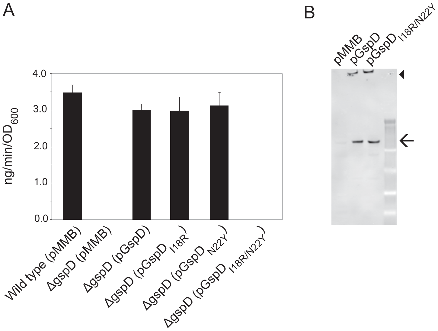 Simultaneous substitution of Ile18 and Asn22 in <i>V. cholerae</i> GspD results in inactivation of protease secretion by <i>V. cholerae.</i>
