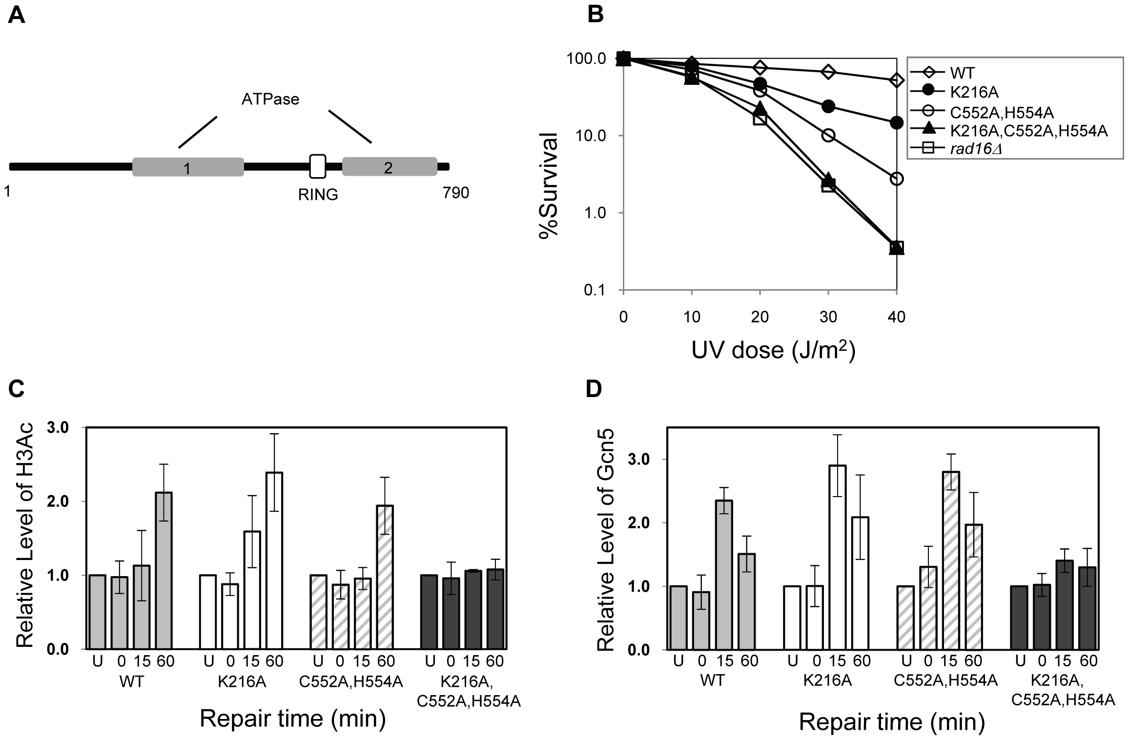The effect of mutating specific domains in Rad16.