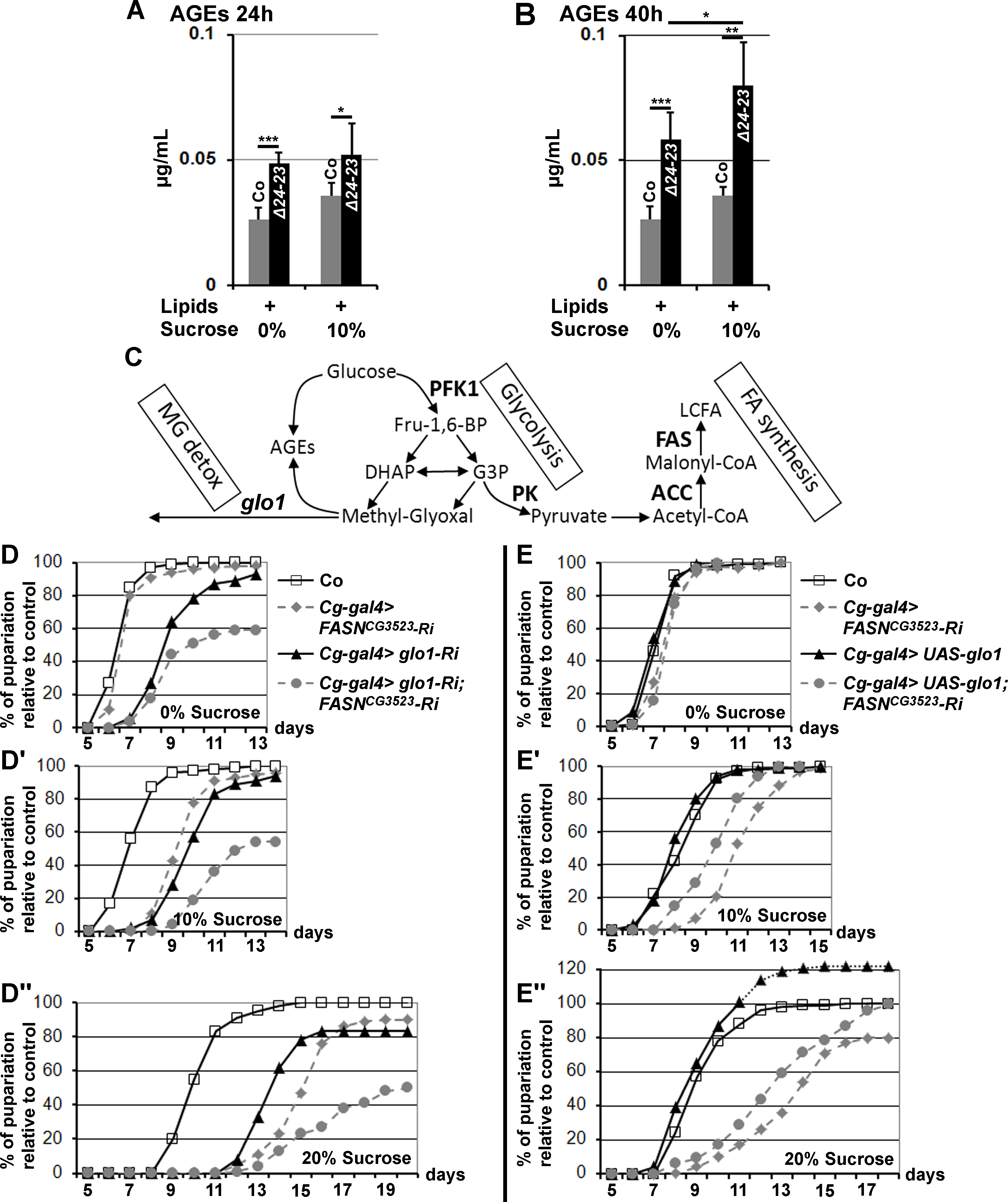 AGE metabolism and <i>FASN</i> deficiency.