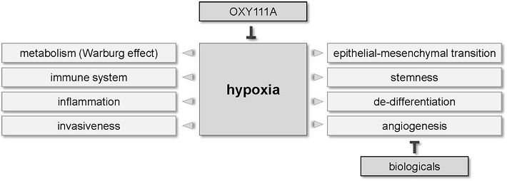 Effects of hypoxia in HPB tumors