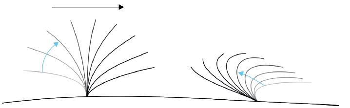 Schéma typického pohybu řasinky v respiračním epitelu, vlevo forward stroke, vpravo backward sweep, hlen je posouván doprava. Fig. 1. Schema of a typical motion of cilia in the respiratory epithelium, forward stroke on the left, backward sweep on the right, mucus is moved to the right.