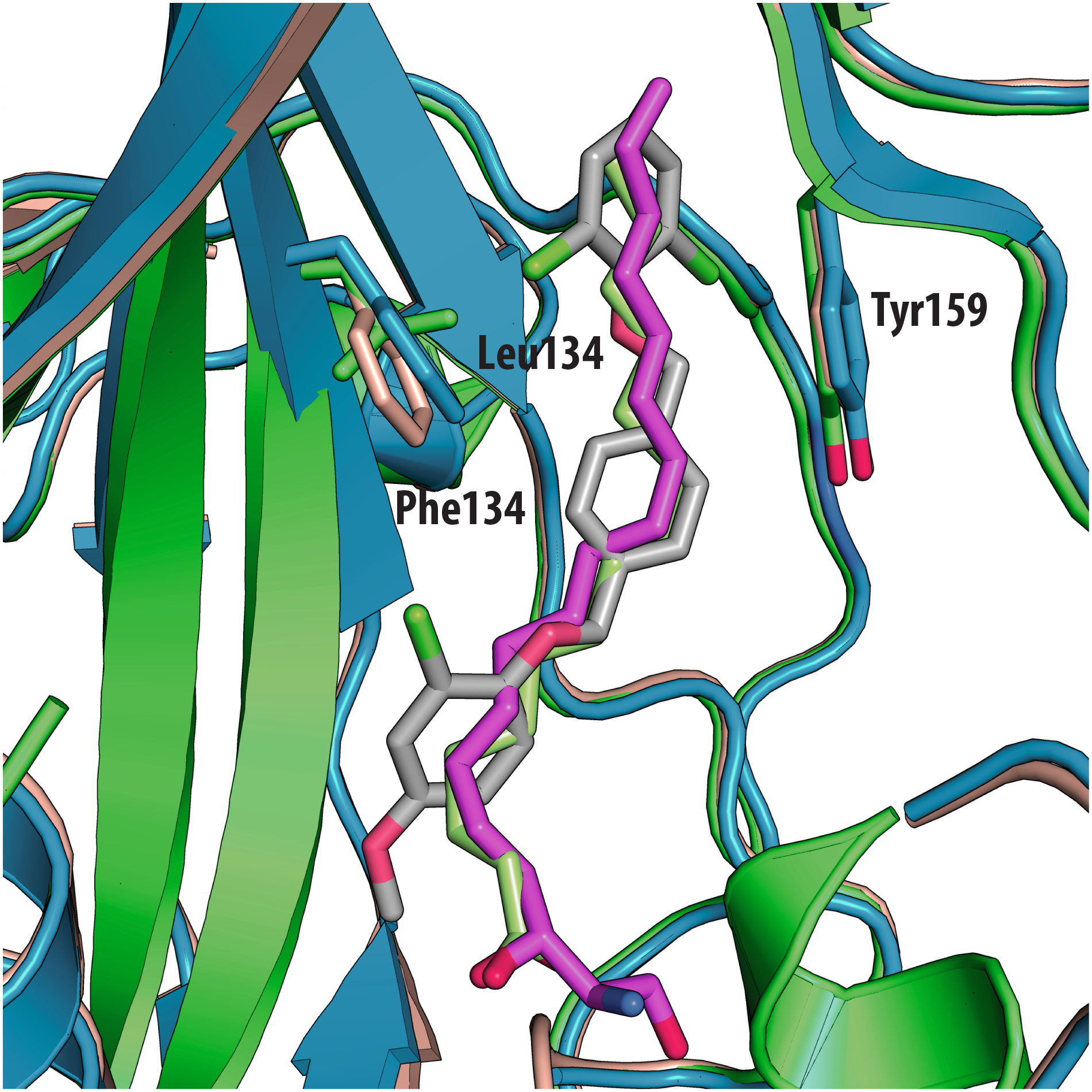 Superposition of VP1 structures of the 3 types of poliovirus (PDBid: 1HXS in green, 1EAH in light orange, 1PVC in blue).