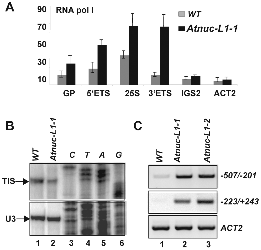 Accumulation of RNA polymerase I and rRNA transcripts from the IGS in <i>Atnuc-L1</i> plants.
