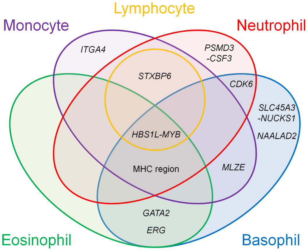 Venn diagram of the pleiotropic associations among the WBC subtypes.