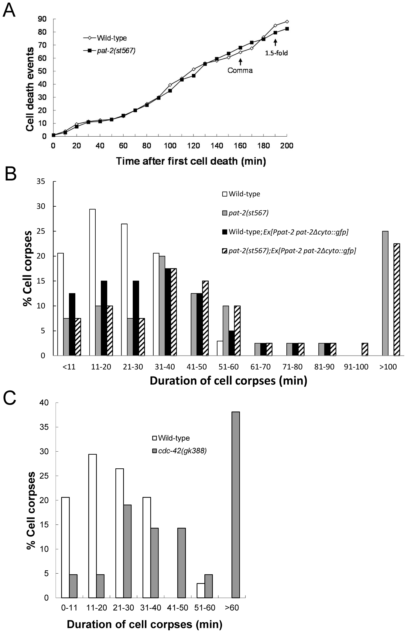<i>pat-2</i> and <i>cdc-42</i> mutants are defective in apoptotic cell removal.