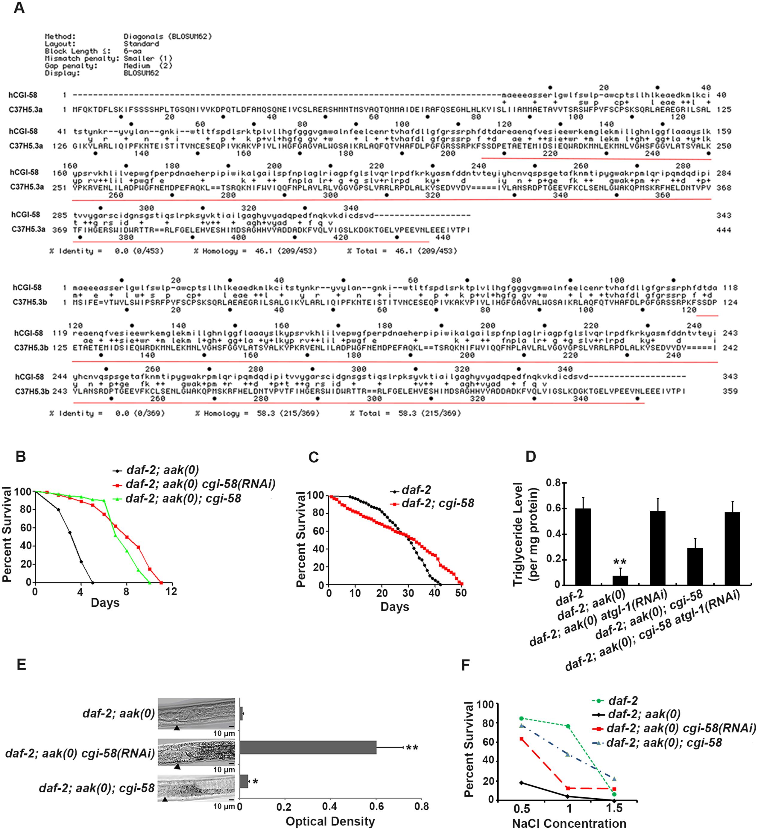 Elimination of <i>cgi-58</i> rescued both triglyceride levels and excretory defects in <i>daf-2; aak(0)</i> mutant Dauer larvae.