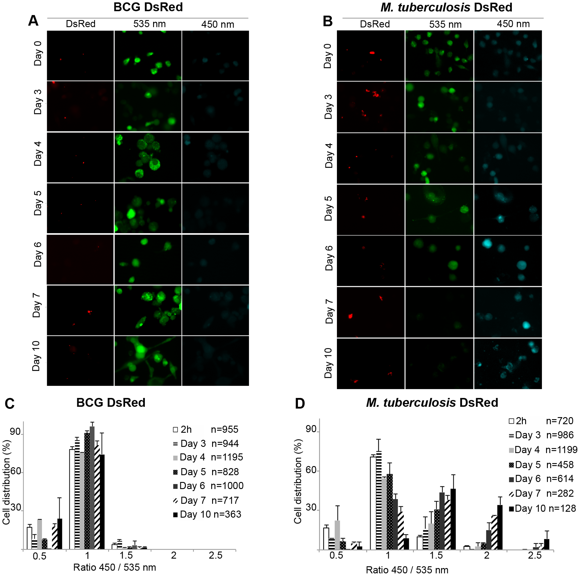 Unlike the attenuated BCG vaccine, virulent <i>M. tuberculosis</i> is able to induce phagosomal rupture in THP-1 macrophages.