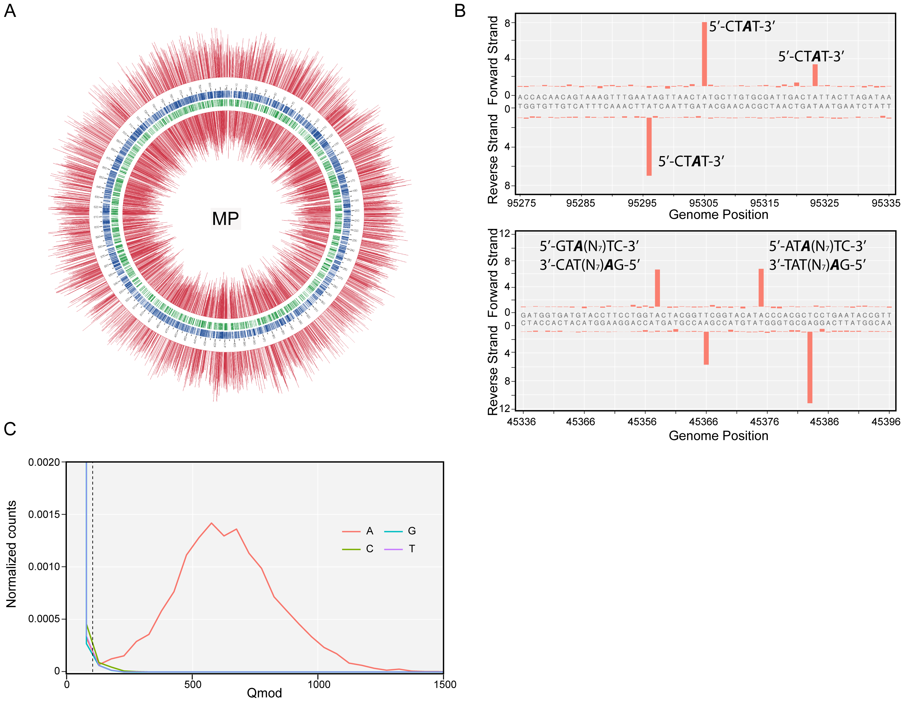 Methylome determination of <i>M. pneumoniae</i> by SMRT sequencing.