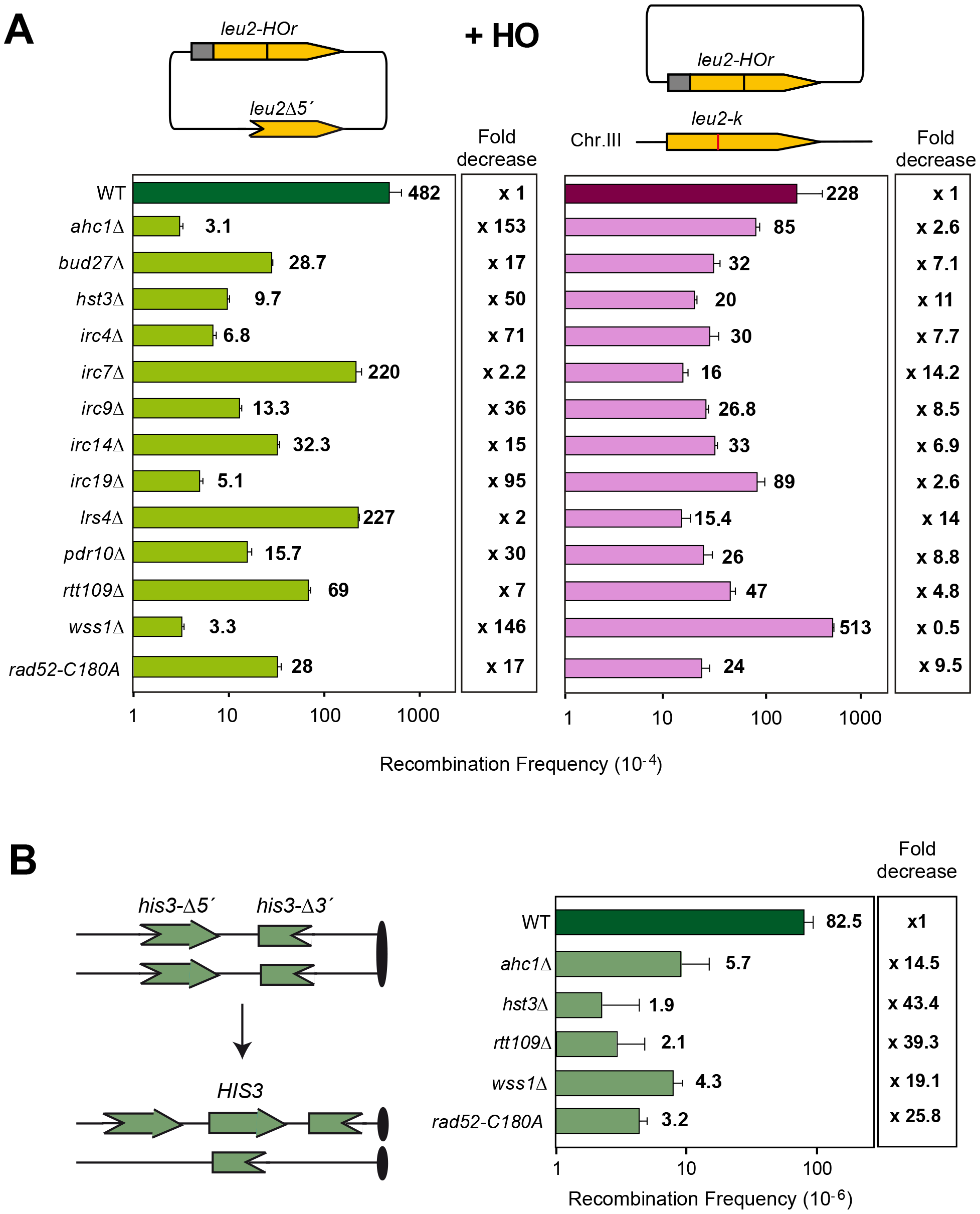 Genetic analysis of recombination in the 13 SCR–defective mutants.