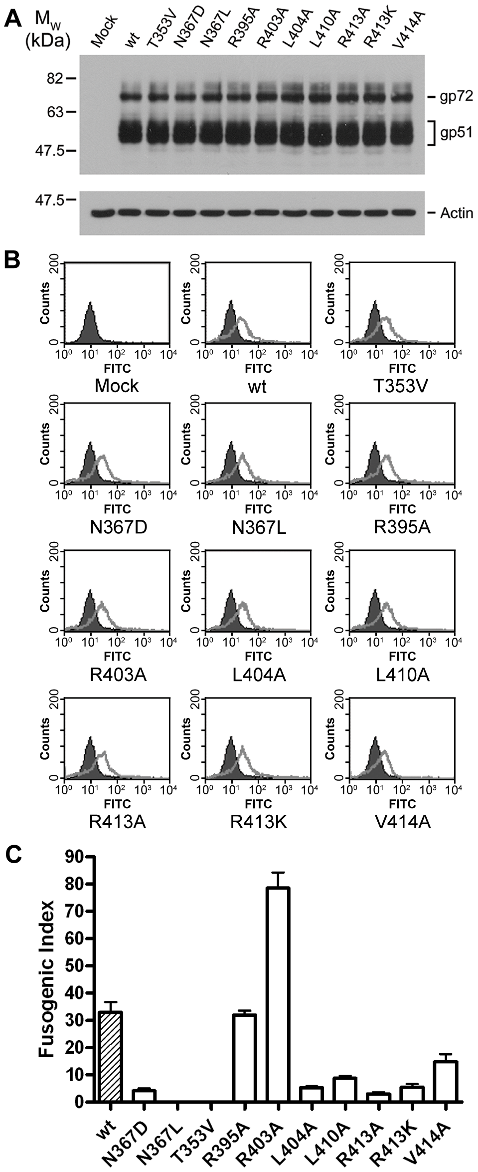 Expression and fusogenicity of mutant BLV envelopes.