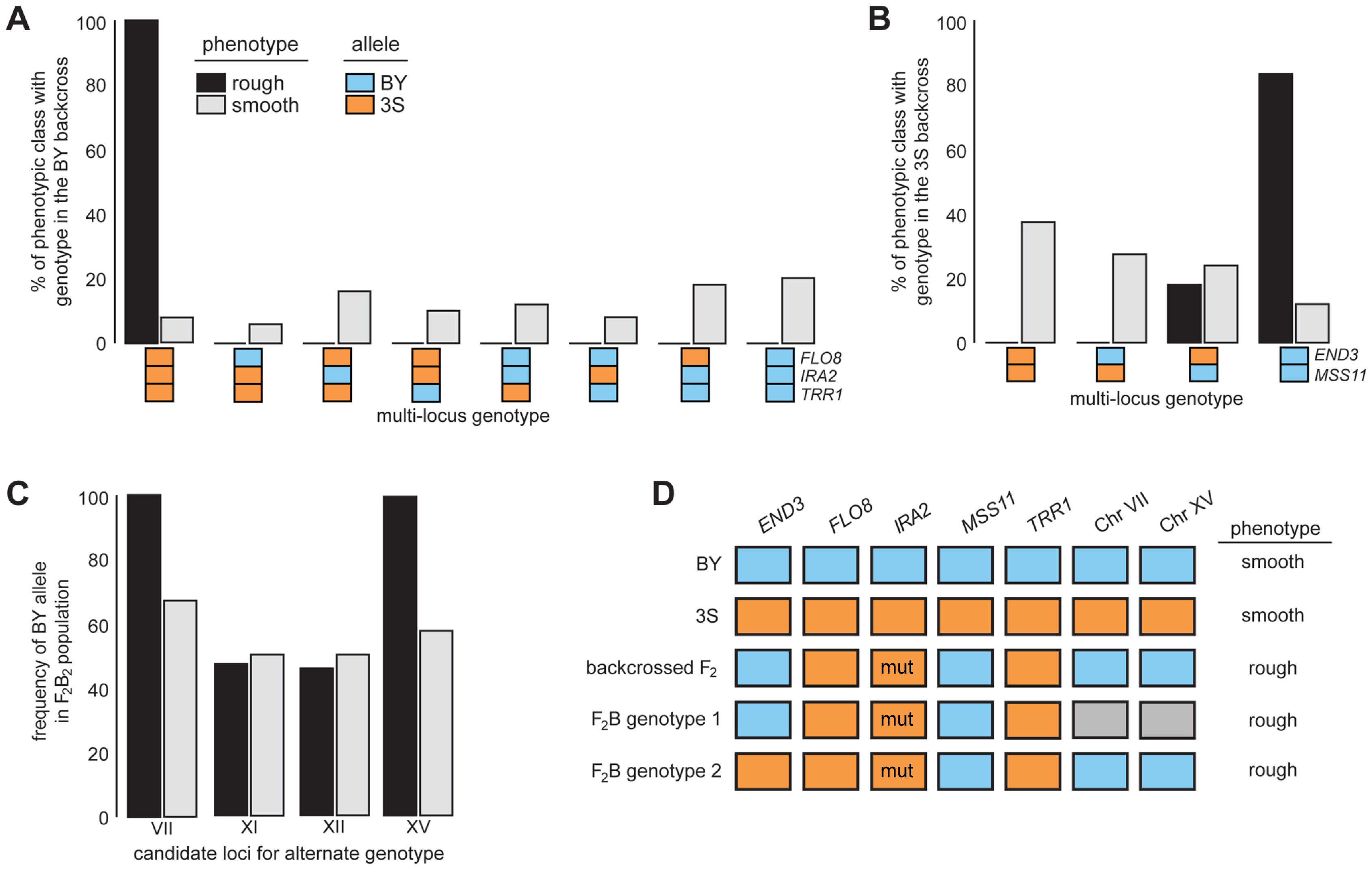 Segregation analysis of causal genes and identification of loci that complement <i>END3</i><sup>3S</sup>.