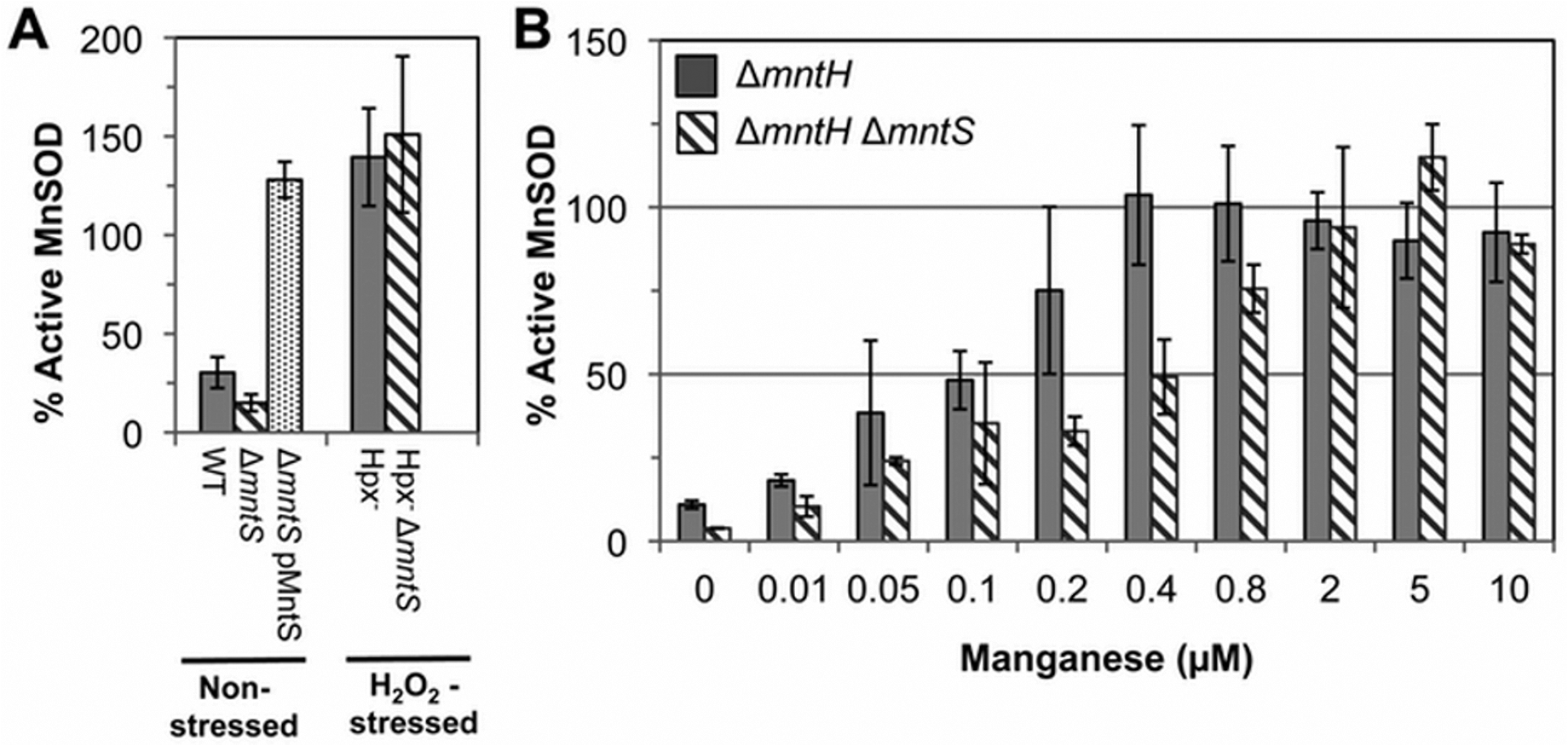 MntS facilitates the activation of manganese-dependent superoxide dismutase.