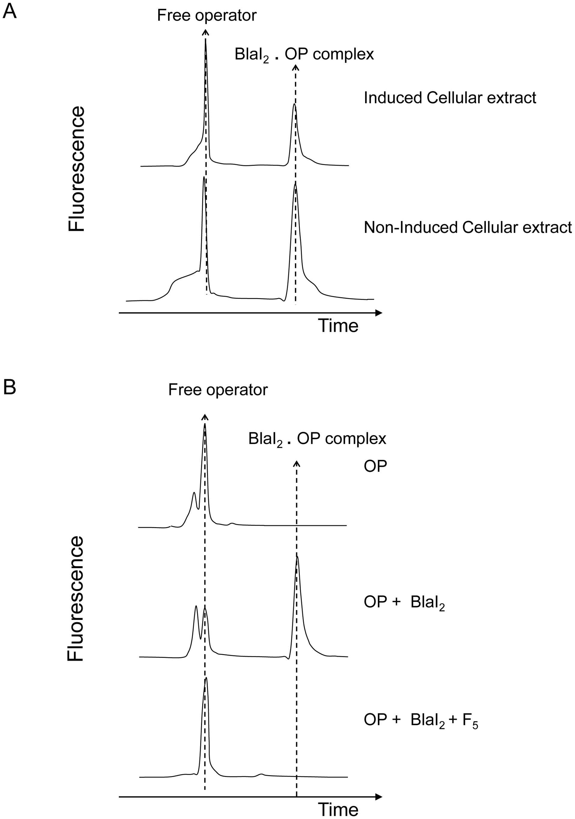 Fluorescent EMSA demonstrate the presence of a coactivator in induced BS995 cellular extracts.