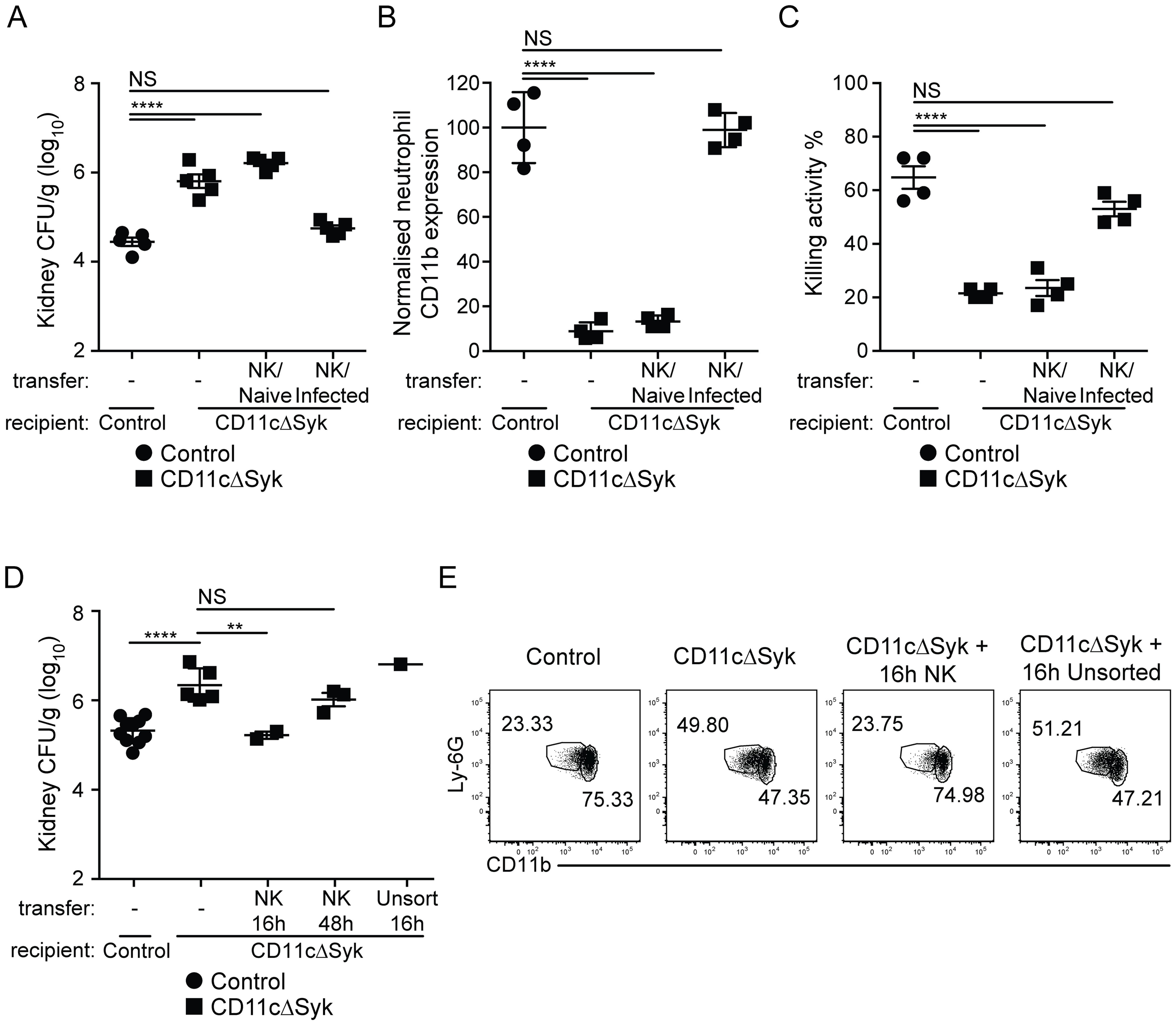 Transfer of <i>in vivo</i> activated NK cells leads to restoration of fungal control in CD11cΔSyk mice.