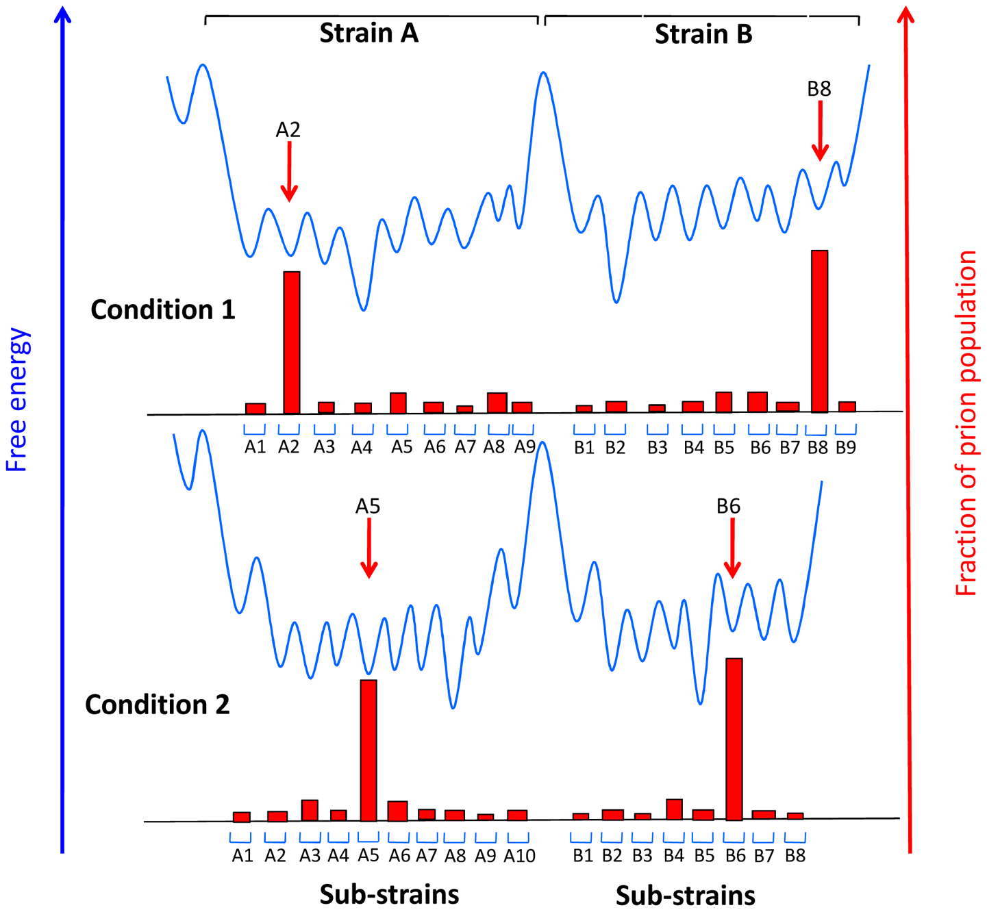 Conjectural free energy landscape for prion strains and sub-strains.