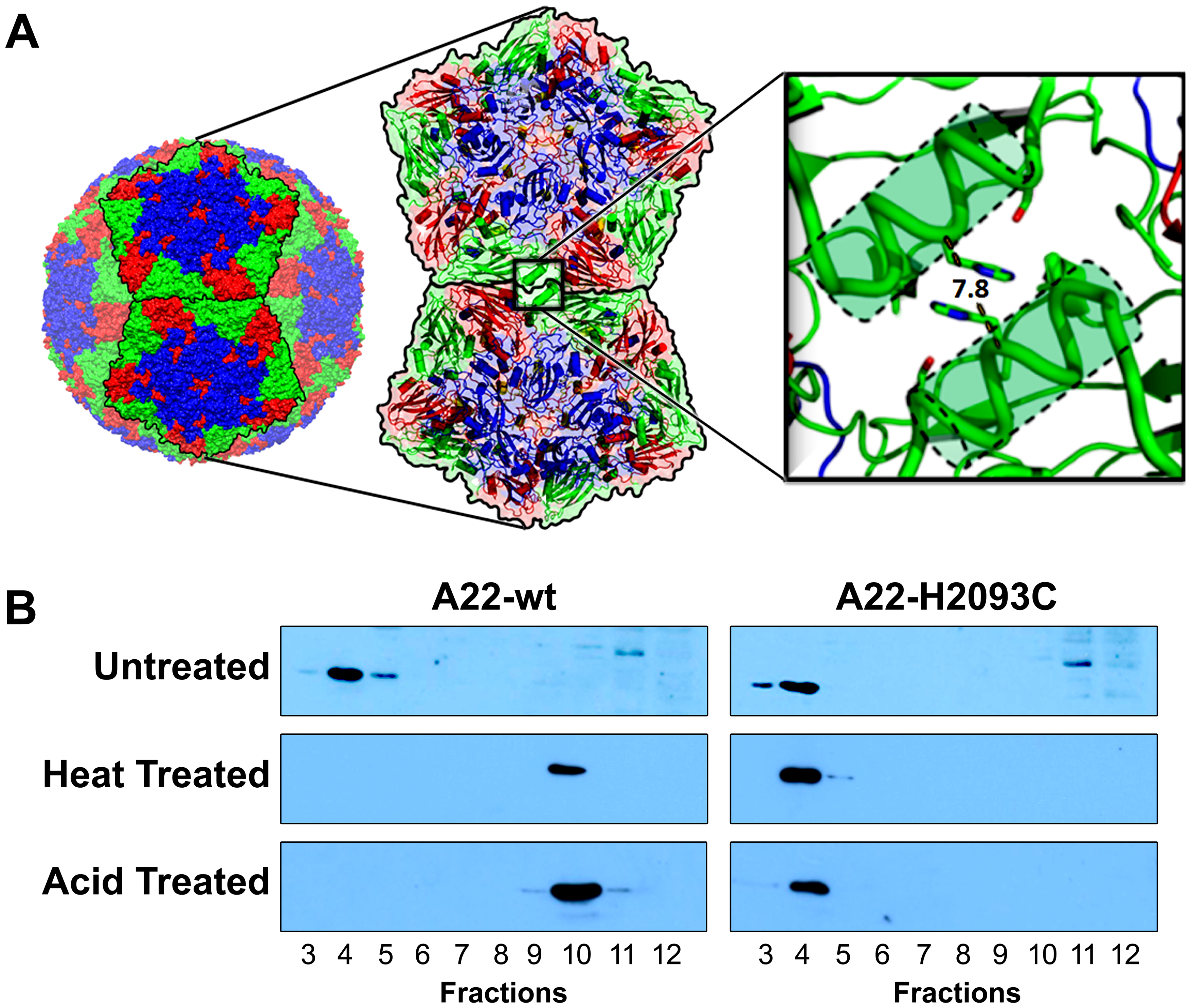 Rational design to produce stable empty capsids of FMDV A22.