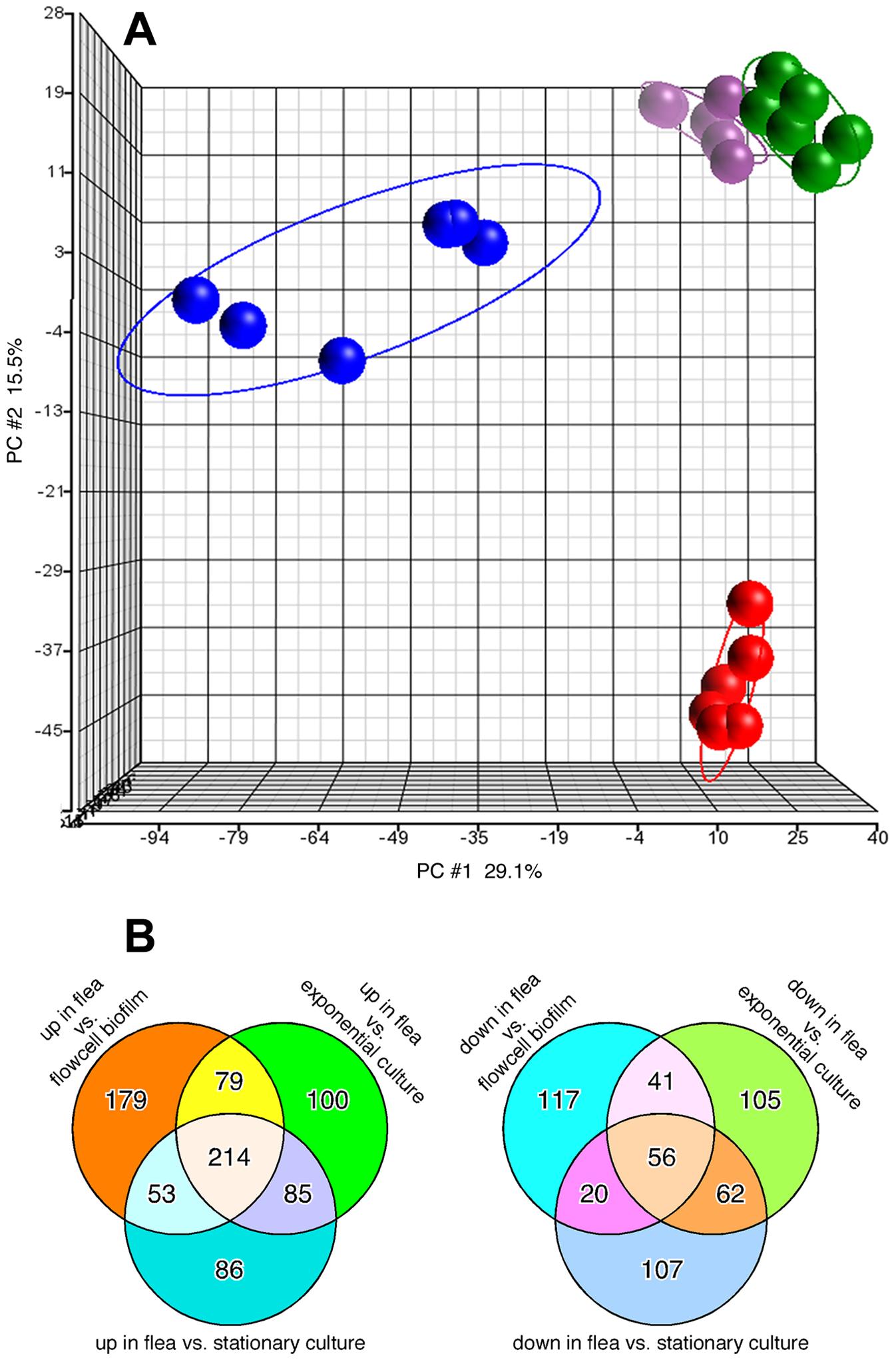 Distinct transcriptional profile of <i>Y. pestis</i> in infected fleas.