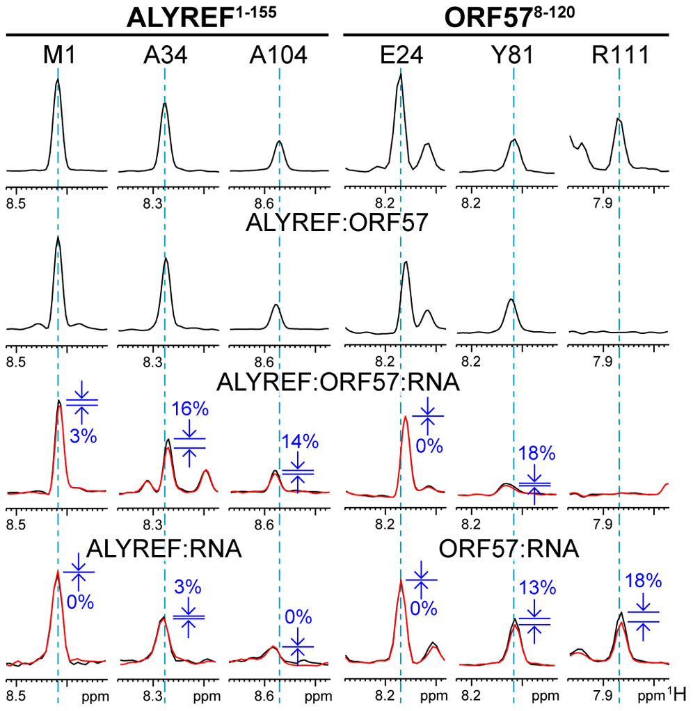 Typical effects of complex formation and RNA→protein ST on selected signals of ALYREF<sup>1–155</sup> and ORF57<sup>8–120</sup>.