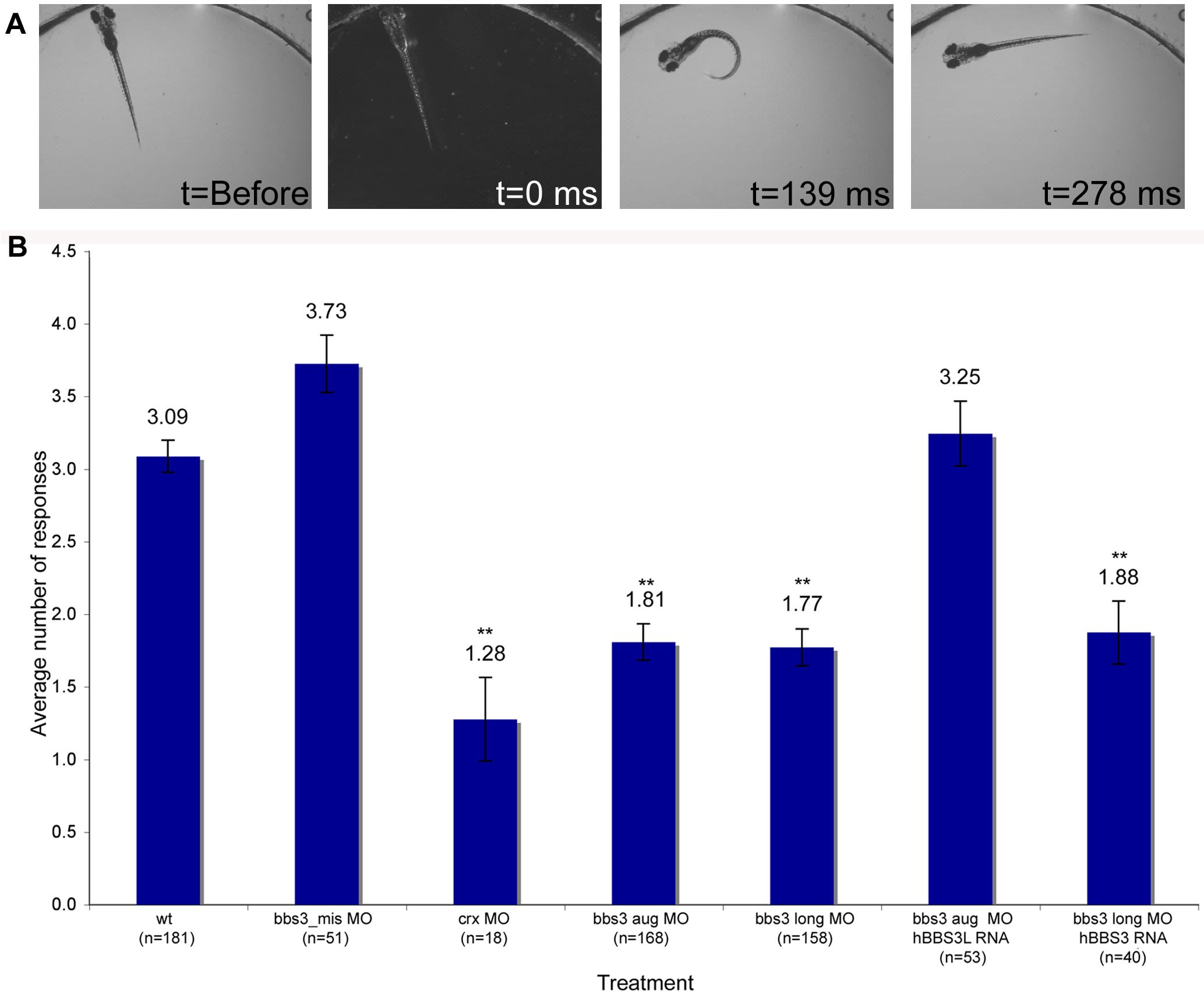 Vision startle response in zebrafish.