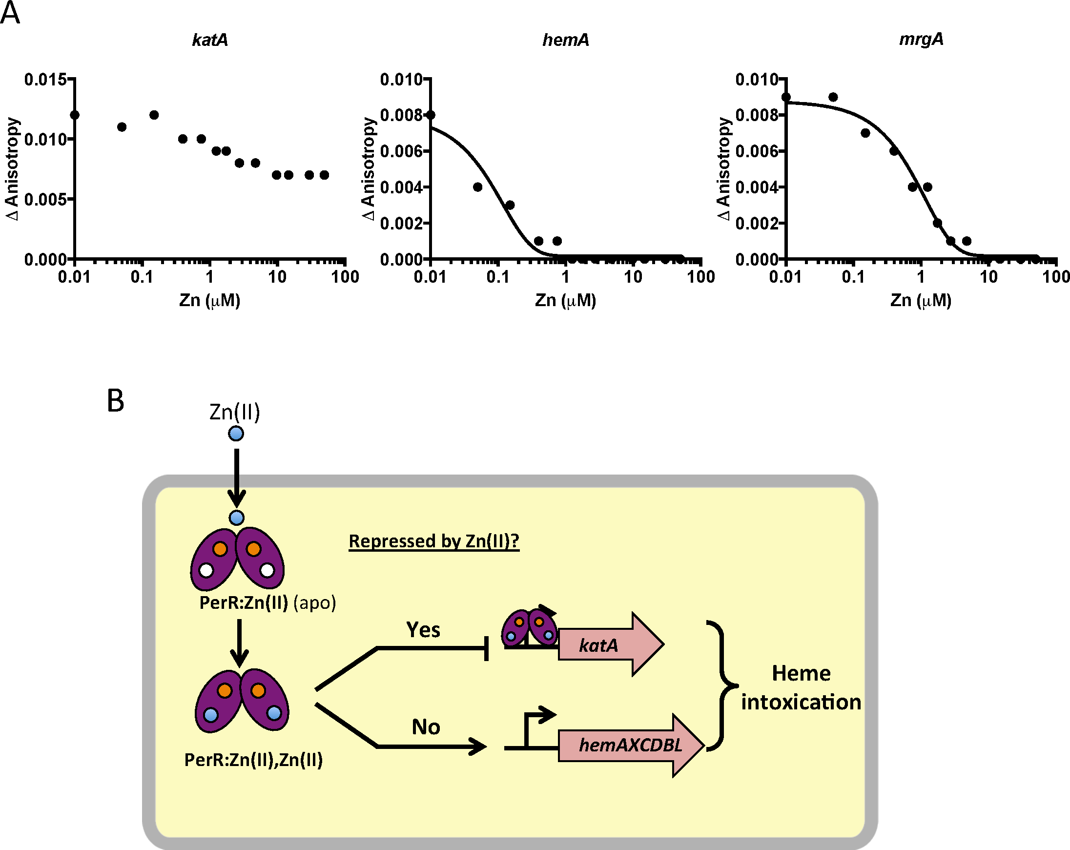 Zn(II) intoxication leads to dysregulation of the PerR regulon.