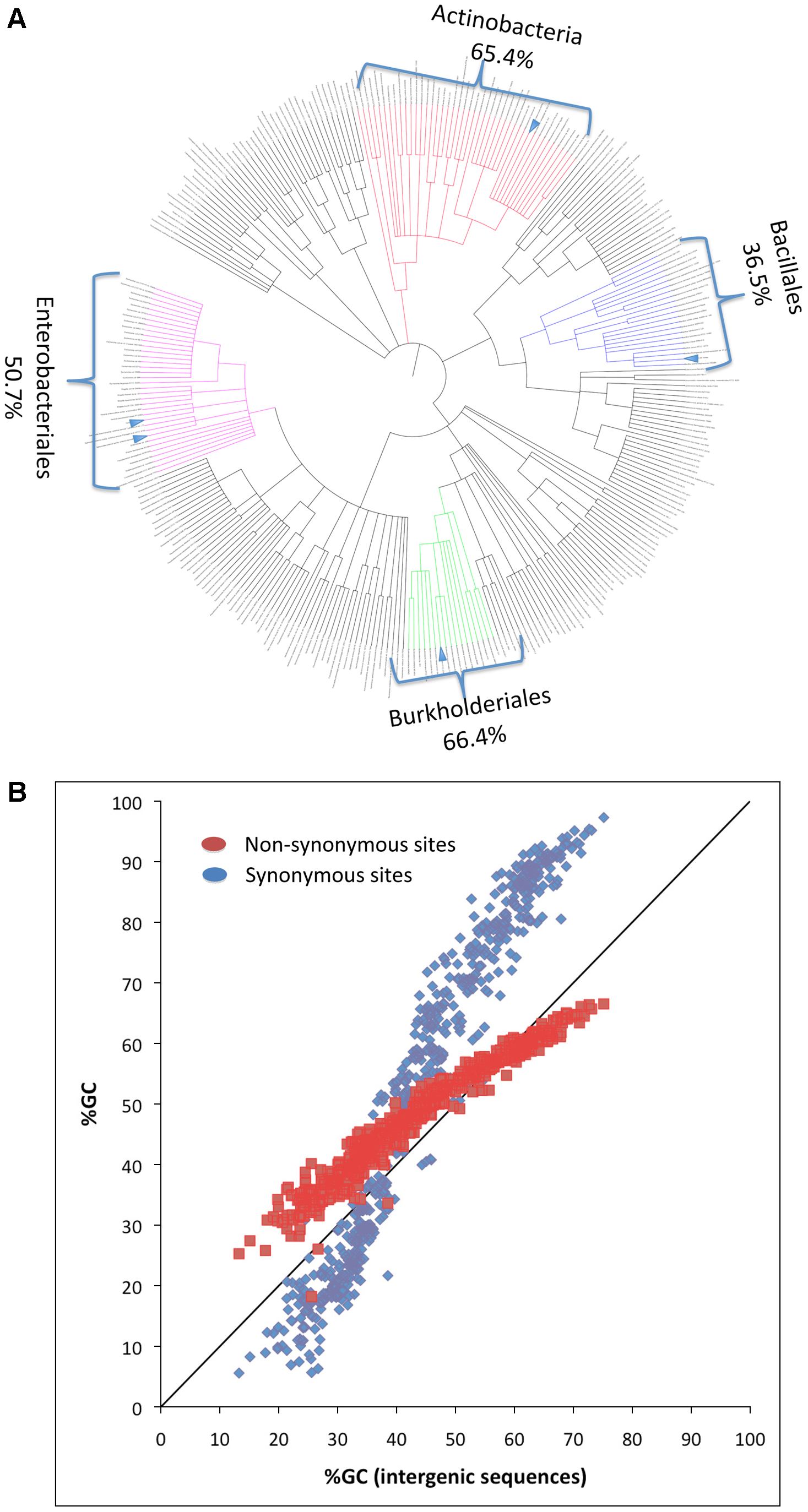 Phylogenetic and genomic variation in GC content.