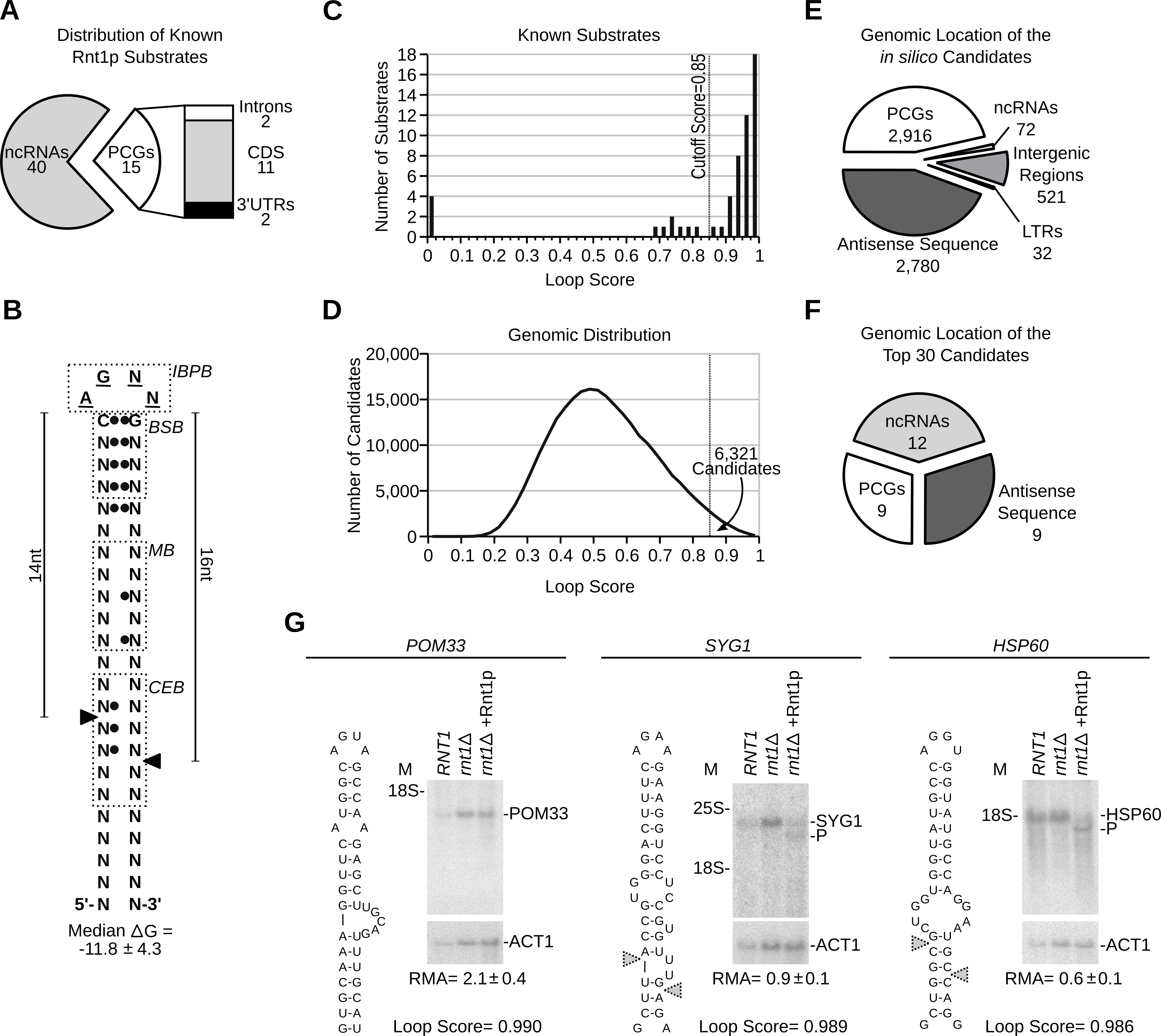 RNA degradation is induced by context dependent activation of randomly distributed cleavage motifs.