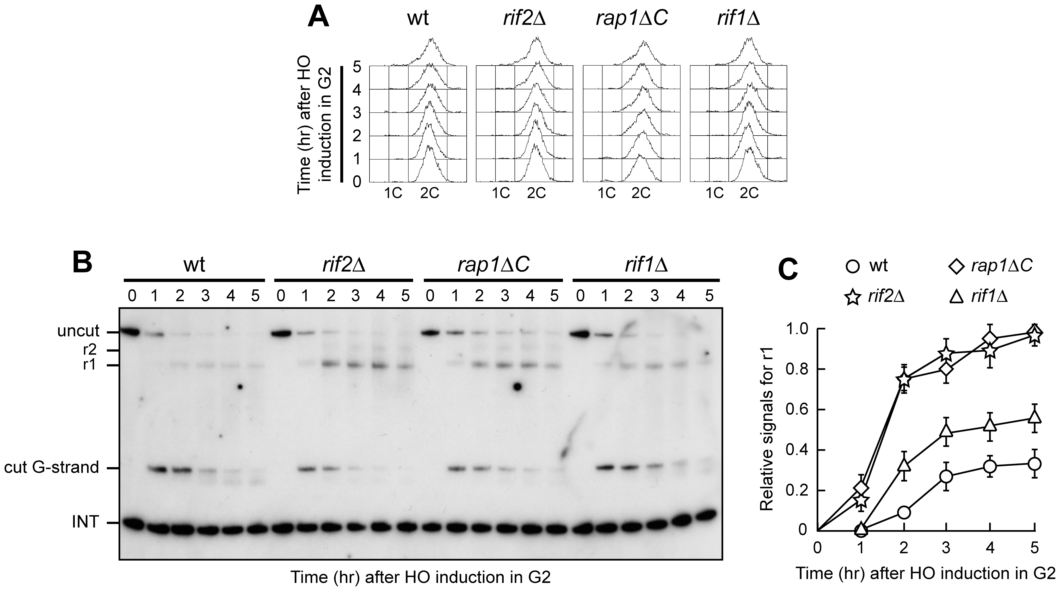 Rap1, Rif1, and Rif2 inhibit resection at a de novo telomere in G2.