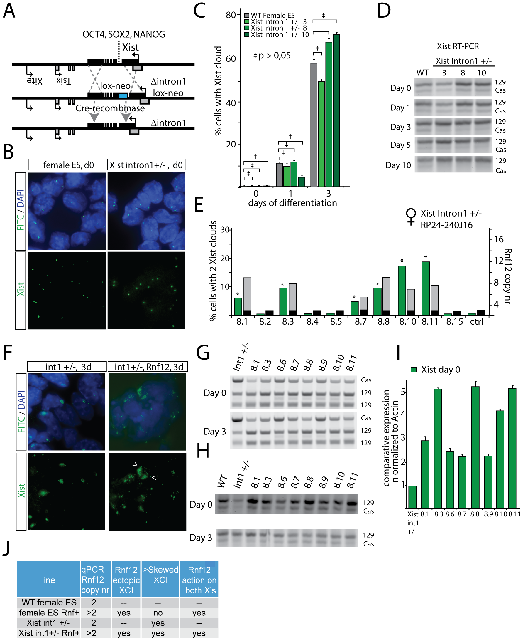 RNF12 initiates XCI independent of pluripotency factor binding to <i>Xist</i> intron 1.