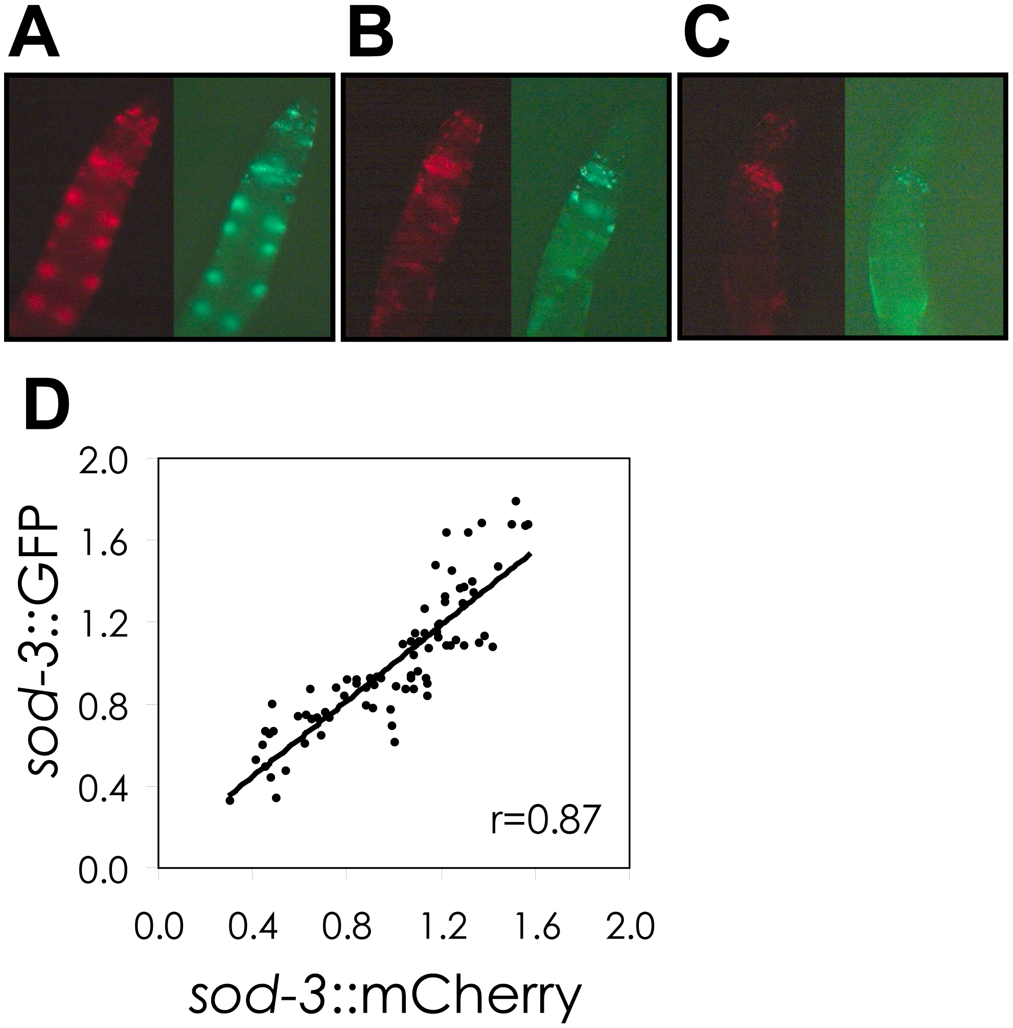 Correlation of <i>sod-3::GFP</i> and <i>sod-3::mCherry</i> reporter expression.