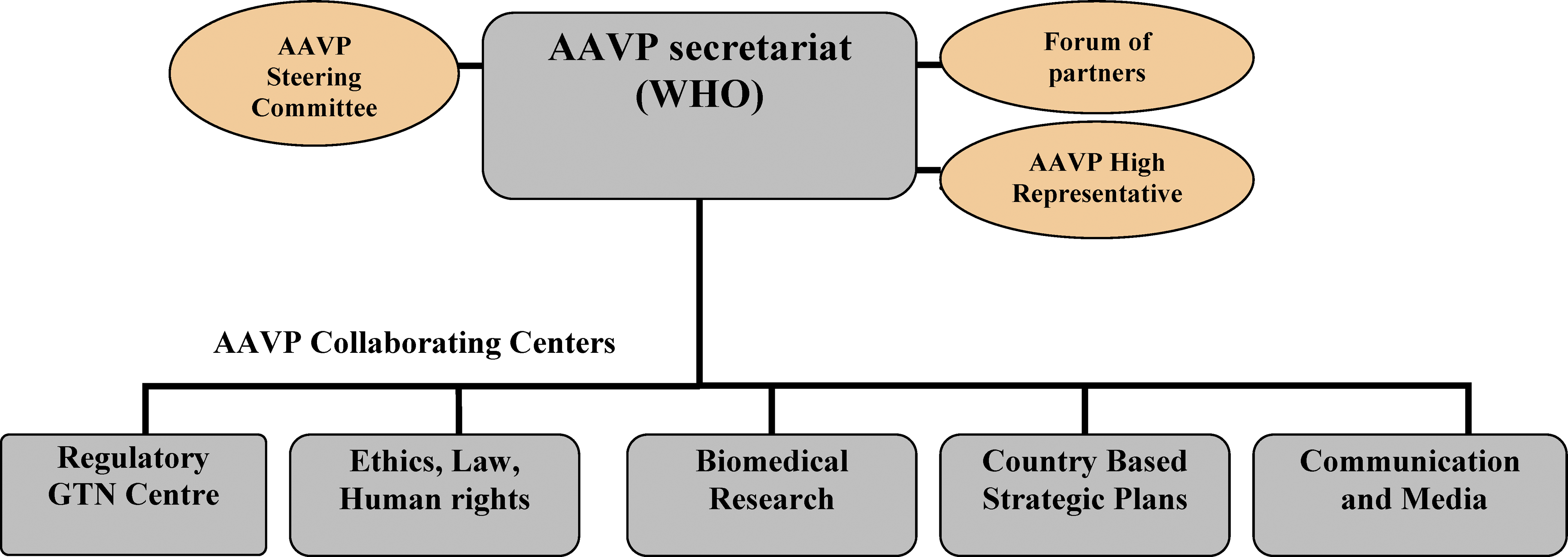 The AAVP Structure