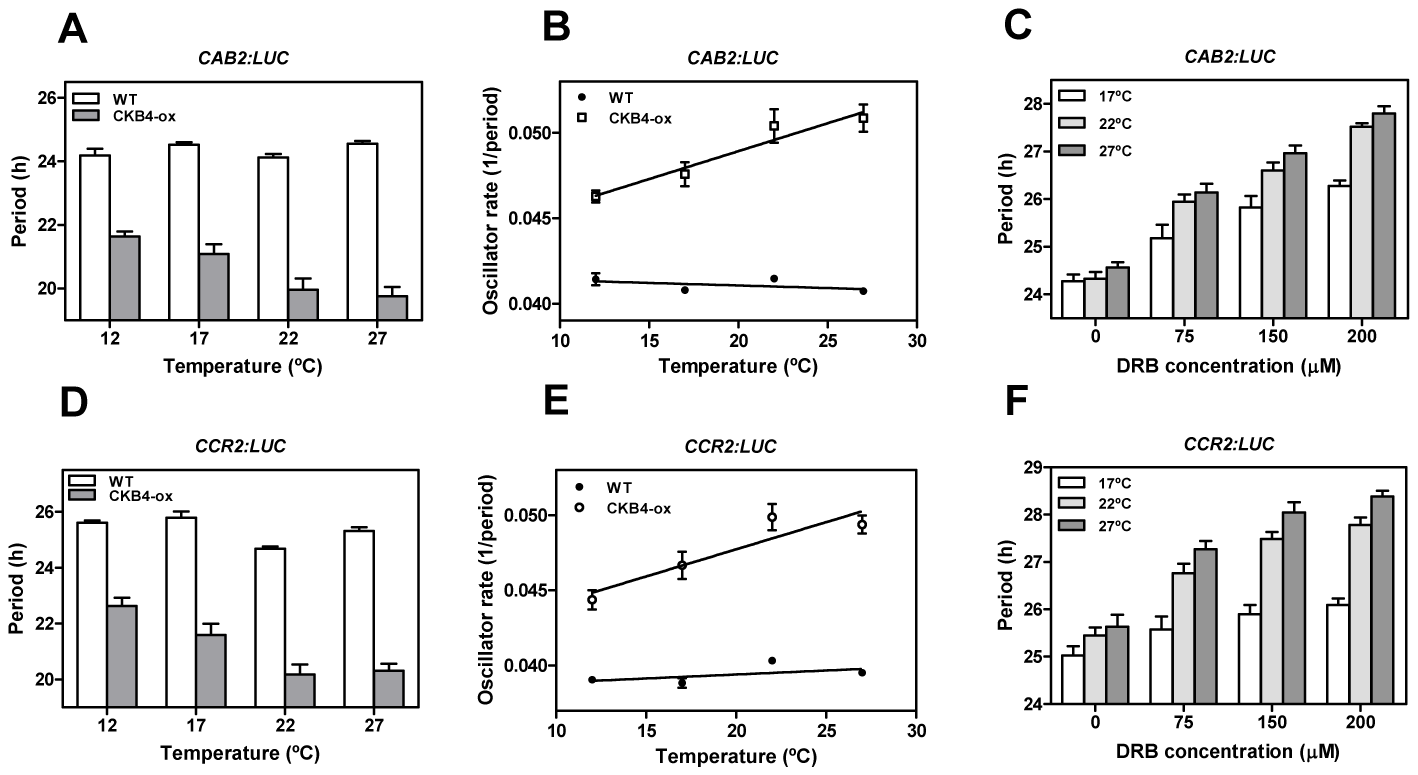 A link between CK2 and temperature compensation in Arabidopsis.